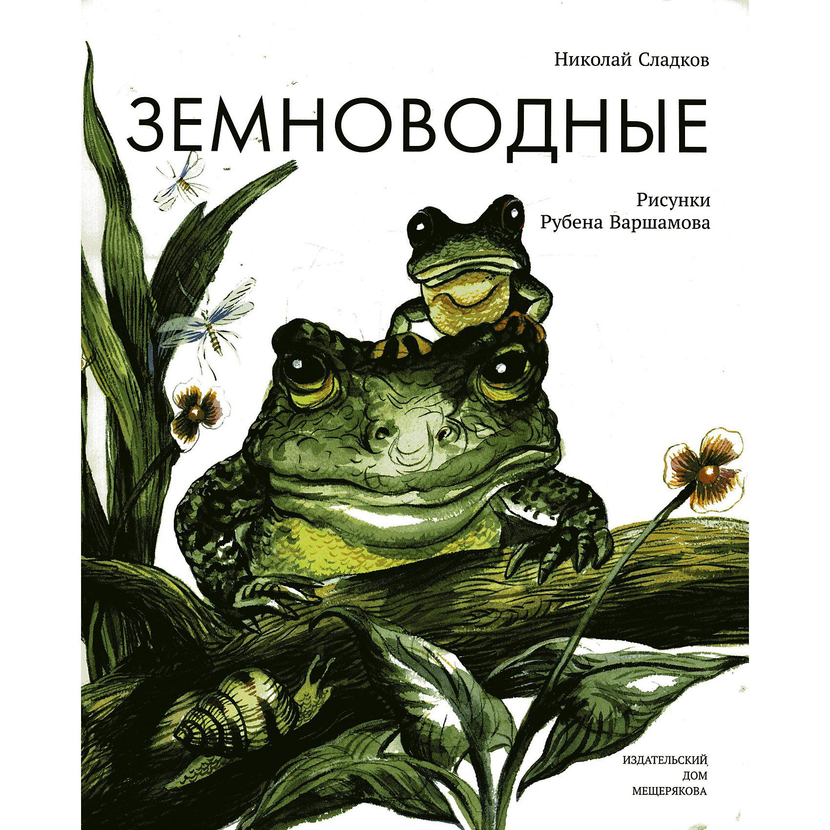 Земноводные, Н. СладковЗемноводные, Н. Сладков - это красочно иллюстрированная познавательная книга для детей.<br>Земноводные – это совершенно удивительные животные. С одинаковым успехом могут они жить как в воде, так и на суше. Отсюда и произошло их название. Земноводных представляют хорошо всем известные лягушки и жабы, а также тритоны, саламандры и червяги. Зачем тритону хвост, чем удивительна удивительная лягушка и какая у жаб коляска - эти и многие другие секреты земноводных раскроет перед читателями уже полюбившийся всем писатель Николай Сладков. А помогут ему в этом иллюстрации замечательного художника Рубена Варшамова. Для младшего школьного возраста.<br><br>Дополнительная информация:<br><br>- Автор: Сладков Николай Иванович<br>- Художник: Варшамов Рубен Артемович<br>- Редактор: Мещеряков Вадим Юрьевич<br>- Издательство: ИД Мещерякова, 2015 г.<br>- Серия: Пифагоровы штаны<br>- Жанр: Человек. Земля. Вселенная<br>- Тип обложки: мягкий переплет (крепление скрепкой или клеем)<br>- Иллюстрации: цветные<br>- Количество страниц: 32 (офсет)<br>- Размер: 273x260x4 мм.<br>- Вес: 180 гр.<br><br>Книгу «Земноводные», Н. Сладков можно купить в нашем интернет-магазине.<br><br>Ширина мм: 259<br>Глубина мм: 3<br>Высота мм: 274<br>Вес г: 200<br>Возраст от месяцев: 72<br>Возраст до месяцев: 120<br>Пол: Унисекс<br>Возраст: Детский<br>SKU: 4522400
