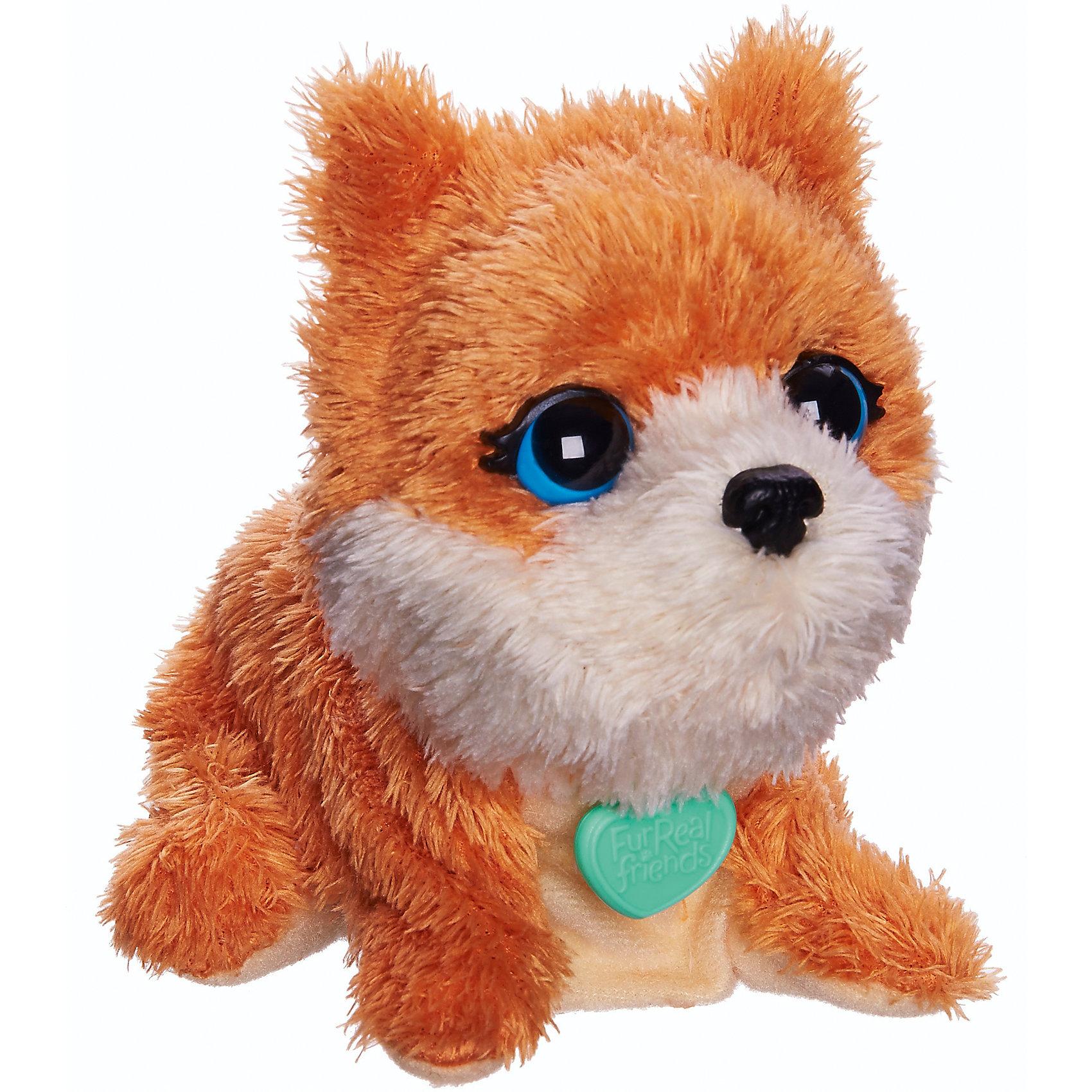 Поющие зверята, FurReal Friends, Hasbro, В1622/B0698