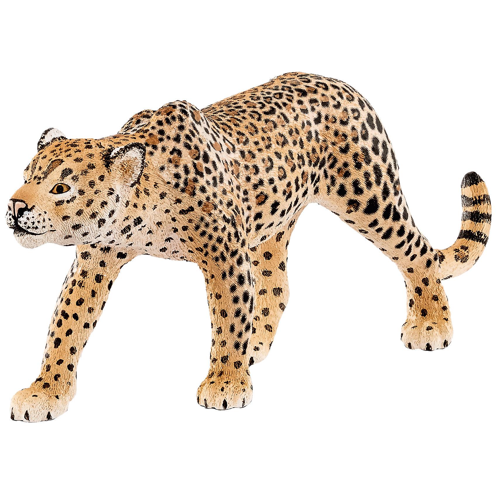 Леопард, SchleichВне категории - РМА<br>Леопард, Schleich – для всех любителей реалистичных фигурок.<br>Отличное дополнение в коллекцию. Красивые качественные фигурки в точности повторяют настоящих животных. Сделаны они из безопасного и не токсичного материала, который не вызывает аллергию. Краски не тускнеют и не стираются от длительной и активной игры. Грозный хищник леопард однозначно порадует вашего ребенка.<br><br>Дополнительная информация:<br><br>- возраст: от 3 лет<br>- материал: каучук, пластик<br>- размер: 12 х 2.5 х 5 см<br>- страна: Германия<br><br>Леопард, Schleich можно купить в нашем интернет магазине.<br><br>Ширина мм: 119<br>Глубина мм: 60<br>Высота мм: 32<br>Вес г: 43<br>Возраст от месяцев: 36<br>Возраст до месяцев: 96<br>Пол: Унисекс<br>Возраст: Детский<br>SKU: 4662505