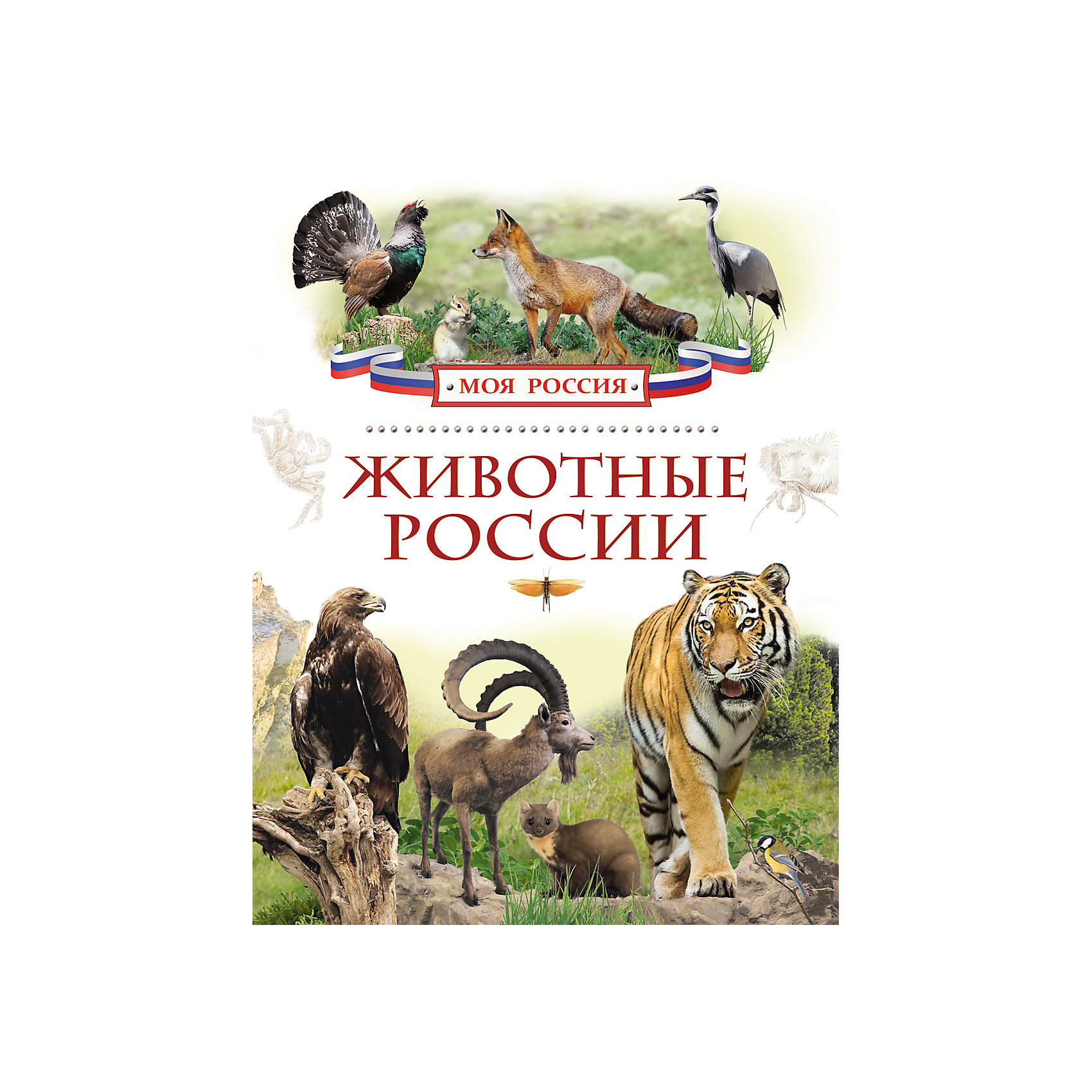 Росмэн Животные России, Моя Россия росмэн великие люди россии моя россия