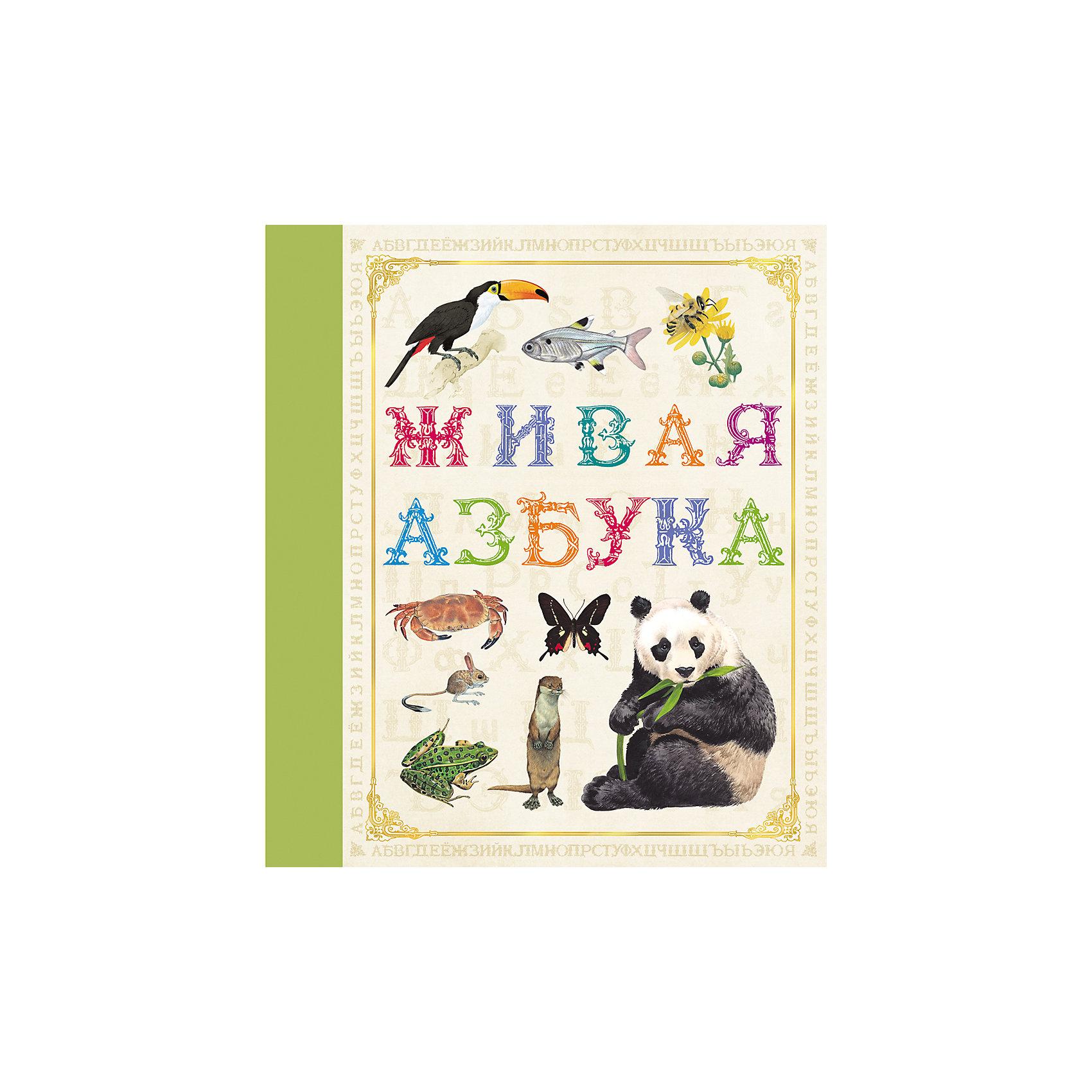 Живая азбукаНевероятной красоты иллюстрированная обучающая книга&#13;<br>ЖИВАЯ АЗБУКА&#13;<br>познакомит малыша не только с алфавитом, но и с великим разнообразием мира животных.&#13;<br>А кроме того, подарит эстетическое удовольствие как ребенку, так и его родителям.&#13;<br>&#13;<br>Богатейшая коллекция красочных изображений животных!&#13;<br>Более 100 потрясающих иллюстраций!&#13;<br>Увлекательное путешествие в мир знаний и красоты!<br><br>Ширина мм: 245<br>Глубина мм: 215<br>Высота мм: 7<br>Вес г: 257<br>Возраст от месяцев: 60<br>Возраст до месяцев: 2147483647<br>Пол: Унисекс<br>Возраст: Детский<br>SKU: 4720602