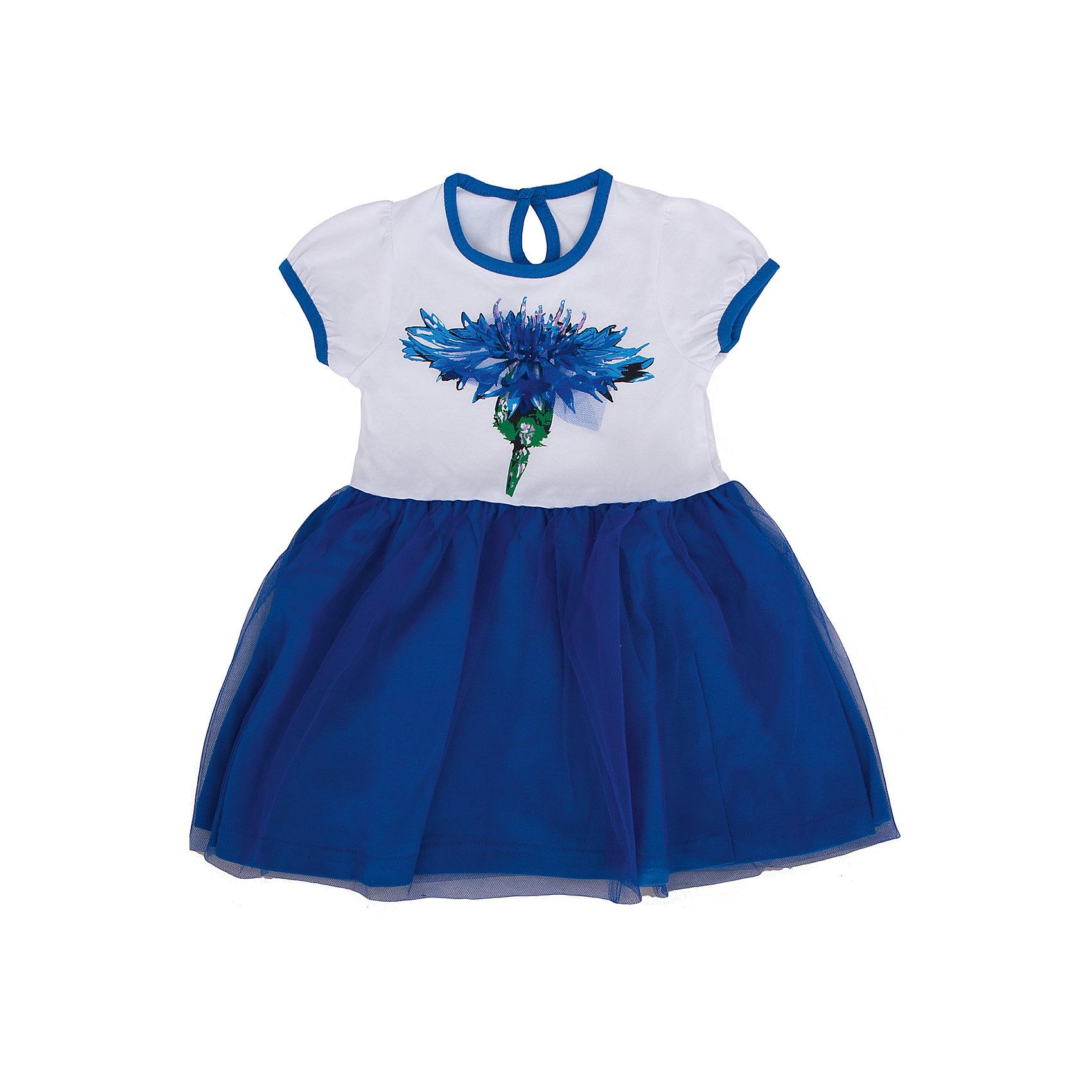 Платье для девочки АпрельПлатье Апрель<br>Чудесное платье с коротким рукавом и застежкой-пуговицей выполнено из натурального хлопка с добавлением лайкры. Контрастные бейки в тон полотнища юбки, яркий принт в виде большого василька, декоративная сетка на юбке сделают платье любимым предметом гардероба Вашей юной модницы. Рекомендуется машинная стирка при температуре 40 градусов без предварительного замачивания.<br><br>Дополнительная информация:<br><br>- Сезон: лето<br>- Цвет: белый, синий<br>- Длина рукава: короткие<br>- Вид застежки: пуговица<br>- Длина юбки: мини<br>- Тип карманов: без карманов<br>- По назначению: повседневный стиль<br>- Ткань: кулир<br>- Состав: 92% хлопок, 8% лайкра<br><br>Платье Апрель можно купить в нашем интернет-магазине.<br><br>Ширина мм: 236<br>Глубина мм: 16<br>Высота мм: 184<br>Вес г: 177<br>Цвет: голубой<br>Возраст от месяцев: 24<br>Возраст до месяцев: 36<br>Пол: Женский<br>Возраст: Детский<br>Размер: 98,86,116,110,104,92<br>SKU: 4726258