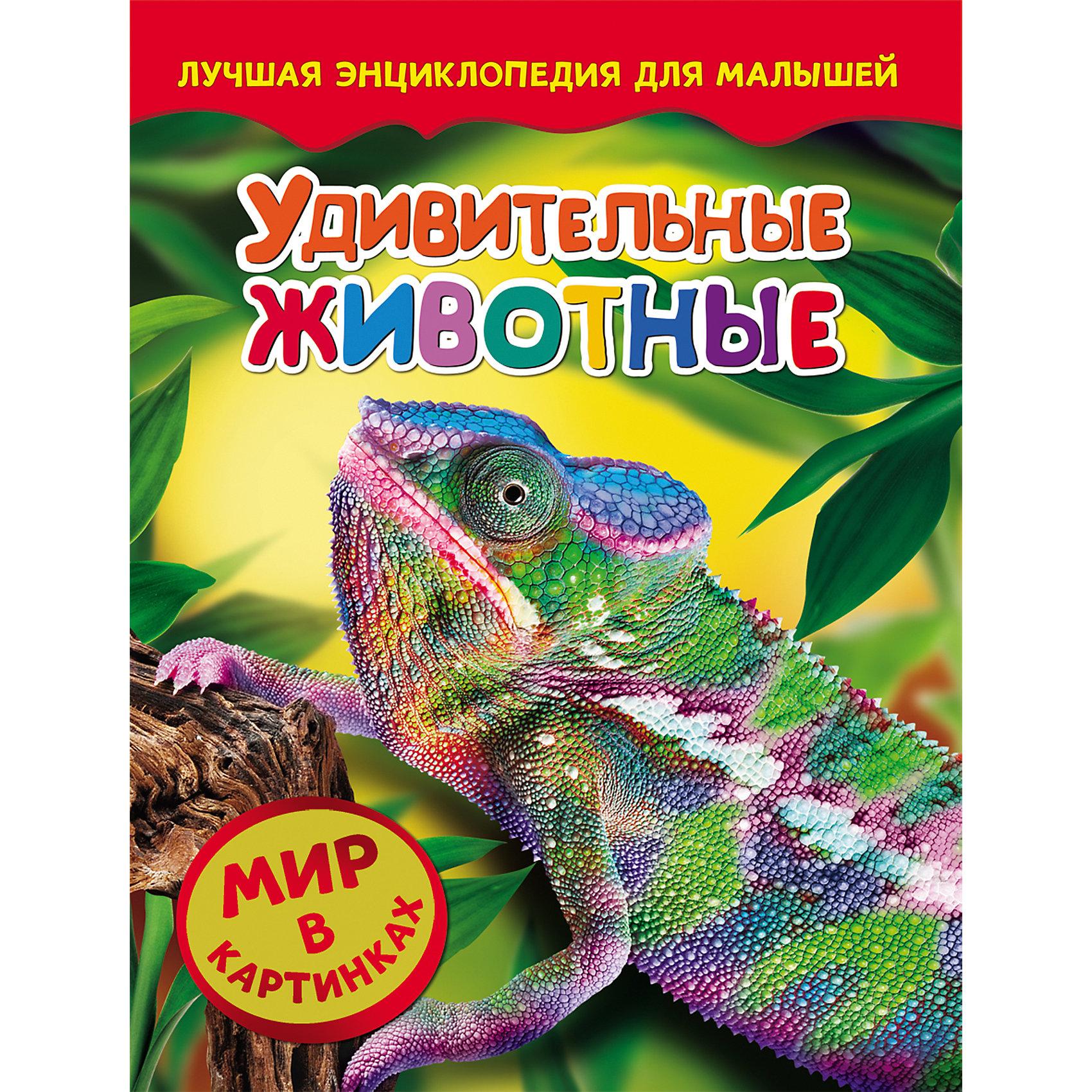 Удивительные животные, Мир в картинкахС этой удивительной книжкой ваш ребенок откроет огромный мир в картинках! Малыши обожают рассматривать яркие рисунки, с помощью этого они познают мир, развивают цветовосприятие, фантазию и мышление.<br>На страницах этой книги ребенок найдет множество изображений удивительных и редких животных. Все рисунки очень яркие и прекрасно детализированы - они обязательно привлекут внимание малышей и дадут крохе самые первые знания об окружающем мире. <br><br>Дополнительная информация:<br><br>- Переплет: твердый.<br>- Количество страниц: 24.<br>- Иллюстрации: цветные. <br>- Формат: 26,5х20,5 см. <br><br>Книгу Удивительные животные, Мир в картинках, можно купить в нашем магазине.<br><br>Ширина мм: 265<br>Глубина мм: 205<br>Высота мм: 7<br>Вес г: 285<br>Возраст от месяцев: 36<br>Возраст до месяцев: 72<br>Пол: Унисекс<br>Возраст: Детский<br>SKU: 4756082