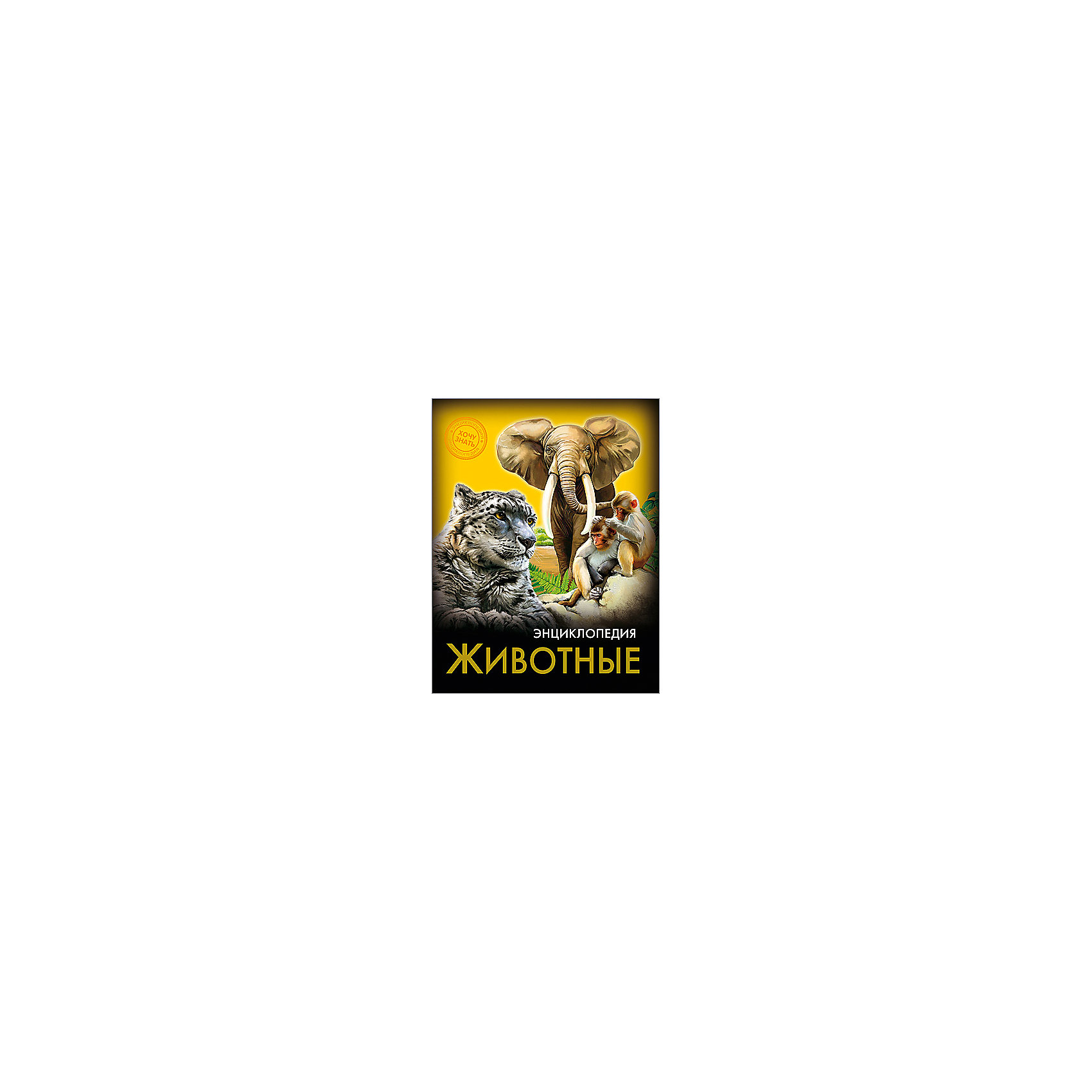Энциклопедия ЖивотныеДетские энциклопедии<br>Эта энциклопедия порадует всех любителей братьев наших меньших! В этом издании вы найдете множество интересных и увлекательных тем, изложенных простым, понятным для детей языком, дополненных яркими иллюстрациями. Энциклопедия в твердой красочной обложке станет прекрасным подарком на любой праздник и обязательно заинтересует ребенка, поможет расширить кругозор и увеличить словарный запас. <br><br>Дополнительная информация:<br><br>- Автор: Соколова Ярослава.<br>- Формат: 21,6х17 см.<br>- Переплет: твердый, 7БЦ.<br>- Количество страниц: 96.<br>- Иллюстрации: цветные.<br>- Содержание: Введение. Многообразие мира хищных животных. Кто такие хоботные. <br>Такие разные парнокопытные. Удивительный мир непарнокопытных. Первые в животном царстве: приматы. Самый многочисленный отряд: грызуны. Заключение. <br><br>Энциклопедию Животные можно купить в нашем магазине.<br><br>Ширина мм: 170<br>Глубина мм: 5<br>Высота мм: 215<br>Вес г: 310<br>Возраст от месяцев: 72<br>Возраст до месяцев: 2147483647<br>Пол: Унисекс<br>Возраст: Детский<br>SKU: 4756237