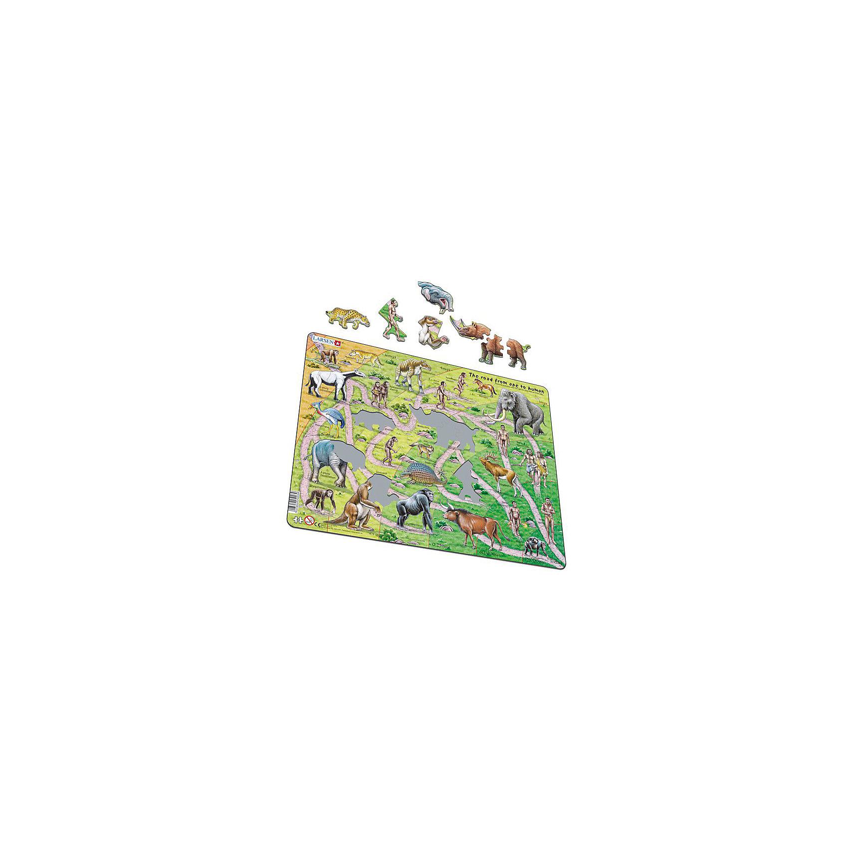 Пазл От обезьяны до человека, 83 детали, LarsenПазлы для малышей<br>Пазлы Ларсен - это прежде всего обучающие пазлы. Многообразие форм вырубки и различные размеры отдельных элементов способствуют развитию мелкой моторики у малышей. Сделанные из высококачественного трехслойного картона, они не деформируются и легко берутся в руки. Все пазлы снабжены специальной подложкой, благодаря чему их удобно собирать.<br><br>Яркие и оригинальные пазлы норвежского бренда Ларсен радуют детей и взрослых. Каждый пазл - настоящая картина, которую необходимо собрать, чтобы восхищаться удивительными животными и птицами. Пазл от обезьяны до человека рассказывает об истории происхождения жизни на земле.<br><br>Пазлы Ларсен всесторонне влияют на развитие малыша. В процессе игры с мелкими деталями развивается моторика пальчиков, красочные картинки стимулируют воображение, мышление и память.<br><br>В наборе: 83 элемента пазла.<br><br>Ширина мм: 365<br>Глубина мм: 5<br>Высота мм: 285<br>Вес г: 320<br>Возраст от месяцев: 36<br>Возраст до месяцев: 1188<br>Пол: Унисекс<br>Возраст: Детский<br>SKU: 4761482
