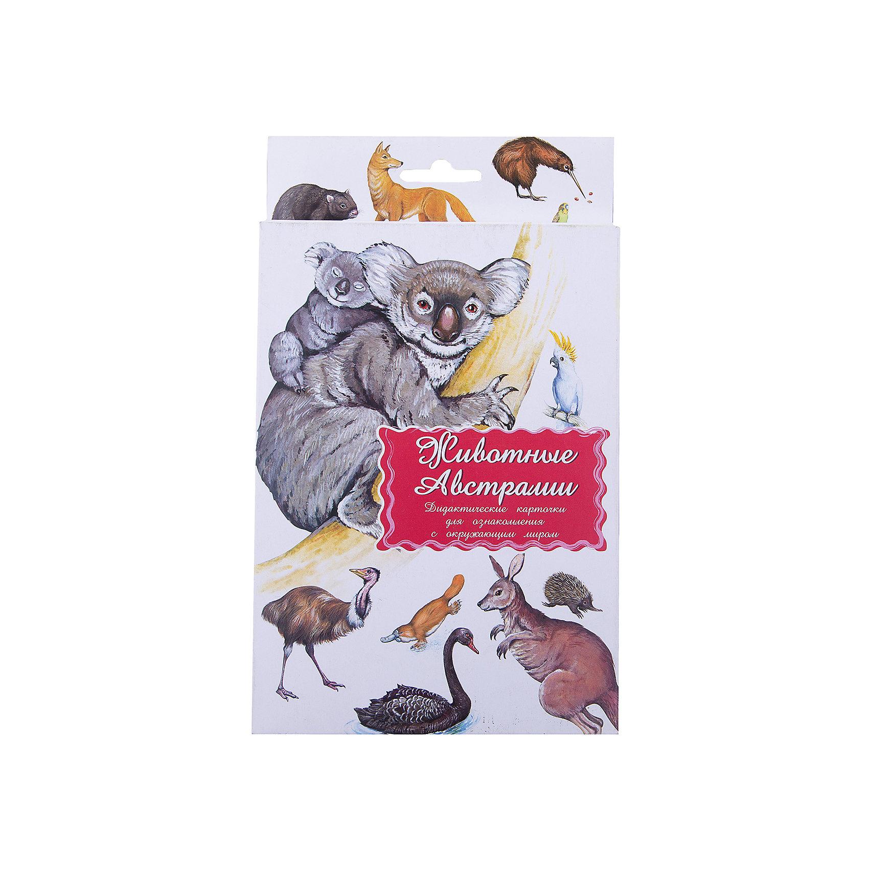 Маленький гений Дидактические карточки Животные Австралии дидактические карточки животные азии