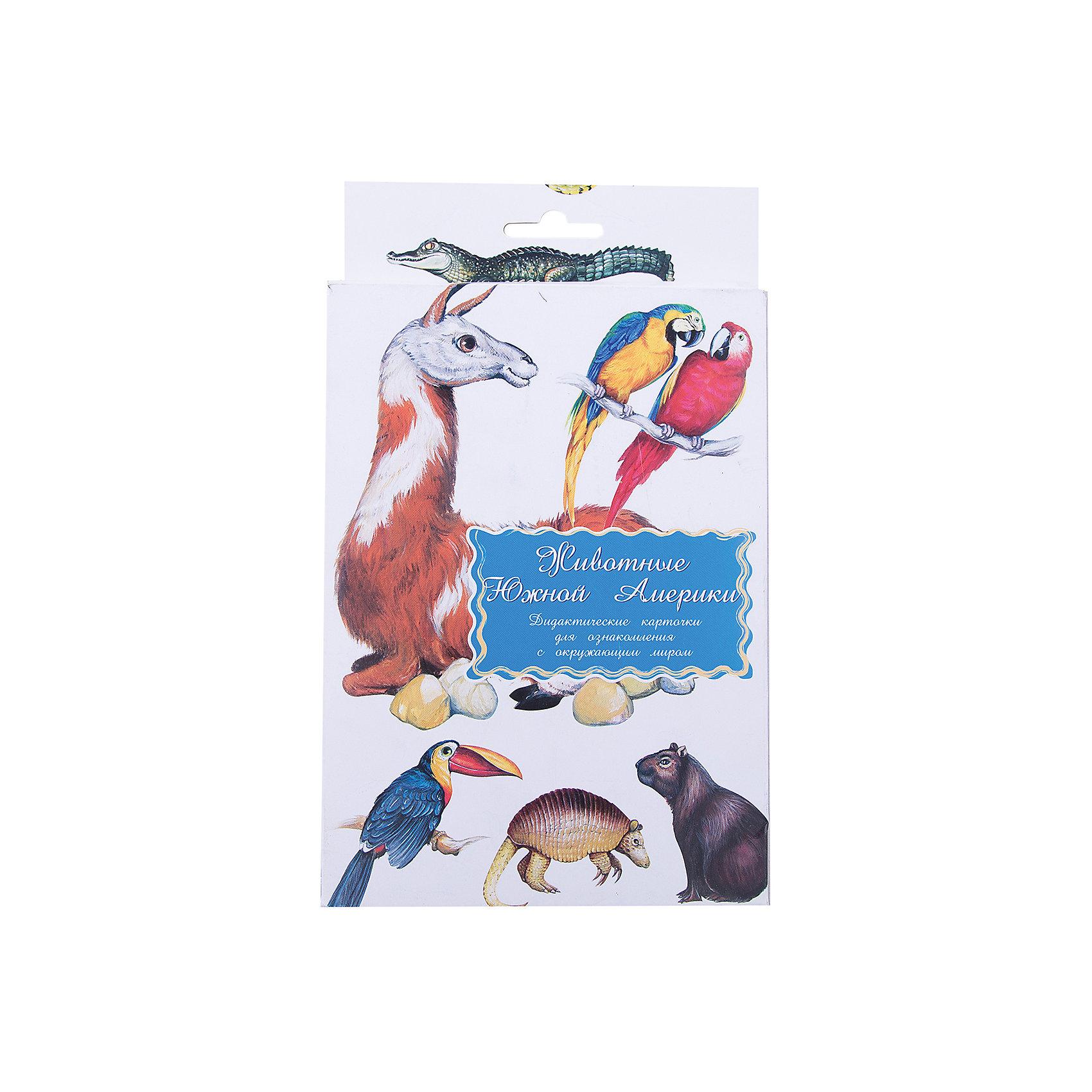 Маленький гений Дидактические карточки Животные Южной Америки дидактические карточки животные азии
