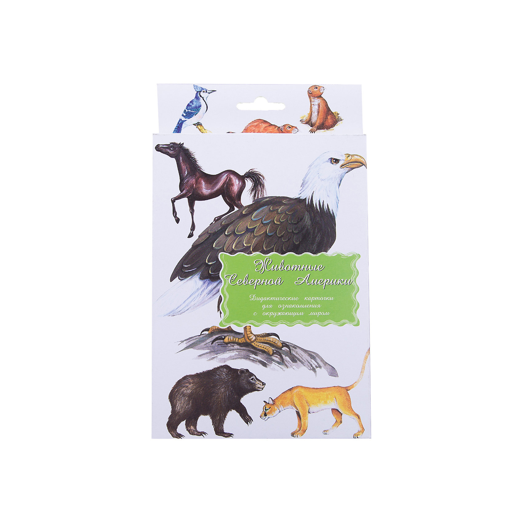 Дидактические карточки Животные Северной АмерикиОбучающие карточки<br>Тематические комплекты дидактических карточек помогут познакомить ребенка с окружающим миром, развить речевые умения, научить сравнивать, классифицировать, обобщать. Карточки рекомендуются родителям для познавательных игр с детьми и занятий  по методике Г.Домана.  Могут использоваться в индивидуальной и групповой работе логопедами, психологами, воспитателями детских садов, учителями начальных классов.  В каждом комплекте 16 карточек, каждая из которых содержит интересную познавательную информацию об изображенном на ней предмете.<br><br>Ширина мм: 150<br>Глубина мм: 90<br>Высота мм: 90<br>Вес г: 200<br>Возраст от месяцев: 36<br>Возраст до месяцев: 2147483647<br>Пол: Унисекс<br>Возраст: Детский<br>SKU: 4802971