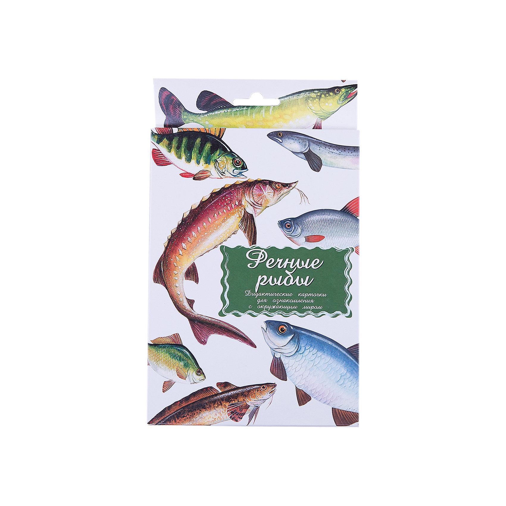 Дидактические карточки Речные рыбыОбучающие карточки<br>Тематические комплекты дидактических карточек помогут познакомить ребенка с окружающим миром, развить речевые умения, научить сравнивать, классифицировать, обобщать. Карточки рекомендуются родителям для познавательных игр с детьми и занятий  по методике Г.Домана.  Могут использоваться в индивидуальной и групповой работе логопедами, психологами, воспитателями детских садов, учителями начальных классов.  В каждом комплекте 16 карточек, каждая из которых содержит интересную познавательную информацию об изображенном на ней предмете.<br><br>Ширина мм: 150<br>Глубина мм: 90<br>Высота мм: 90<br>Вес г: 200<br>Возраст от месяцев: 36<br>Возраст до месяцев: 2147483647<br>Пол: Унисекс<br>Возраст: Детский<br>SKU: 4802977