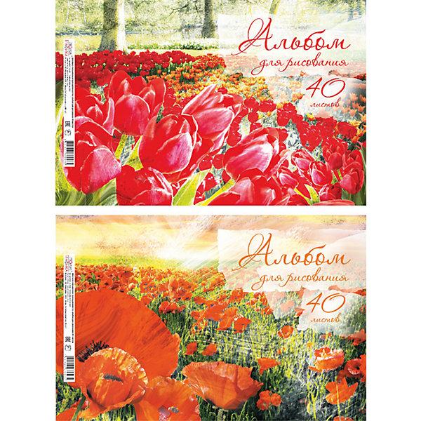 Купить Альбом для рисования Красная поляна , А4, 40 л., Erich Krause, Россия, Унисекс