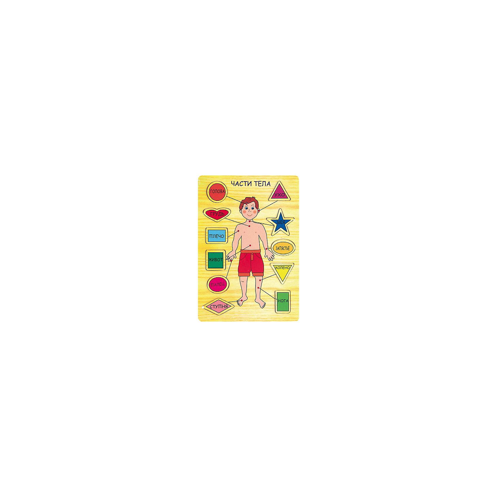 Части тела, Мир деревянных игрушекИгрушки для малышей<br>Части тела – комплект обучит не только человеческому телу, а еще цветам и формам.<br>Небольшое поле включает в себя комплекс, позволяющий одновременно выучить несколько вещей одновременно. Ребенок будет узнавать новые слова из темы «части тела», одновременно вставляя вкладыши в нужные формы. Все вкладыши разных цветов. Яркий красочный дизайн не тускнеет от частого пользования, а качественная натуральная древесина абсолютно безопасна для малышей. <br>Дополнительная информация:<br>- размер: 210х10х295<br>- вес: 400г<br>- материал: дерево <br>- возраст: от 3 лет<br><br>Части тела можно купить в нашем интернет-магазине.<br><br>Ширина мм: 210<br>Глубина мм: 10<br>Высота мм: 295<br>Вес г: 400<br>Возраст от месяцев: 36<br>Возраст до месяцев: 2147483647<br>Пол: Унисекс<br>Возраст: Детский<br>SKU: 4895880
