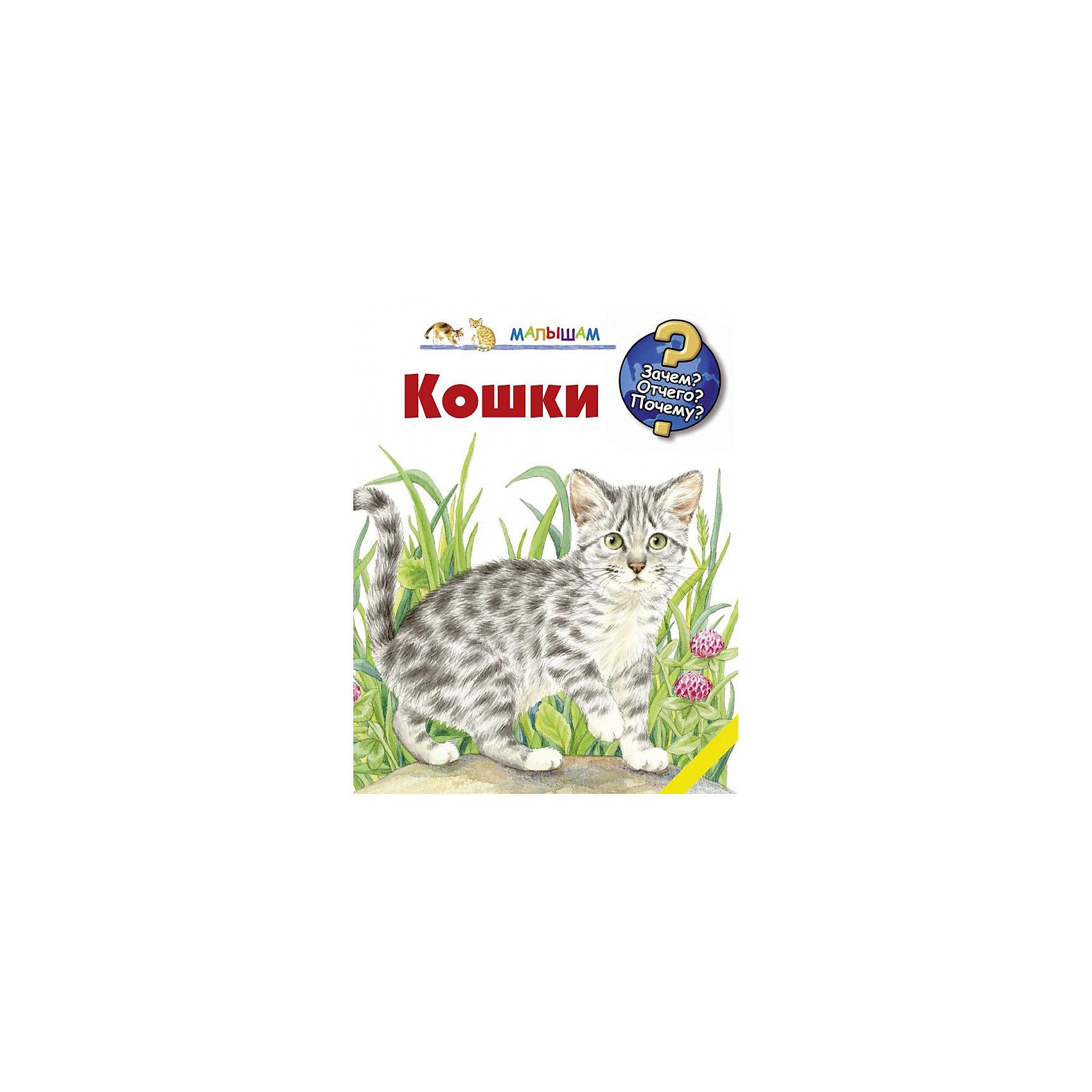 Малыш Кошки ноутбук lenovo ideapad 100 15iby