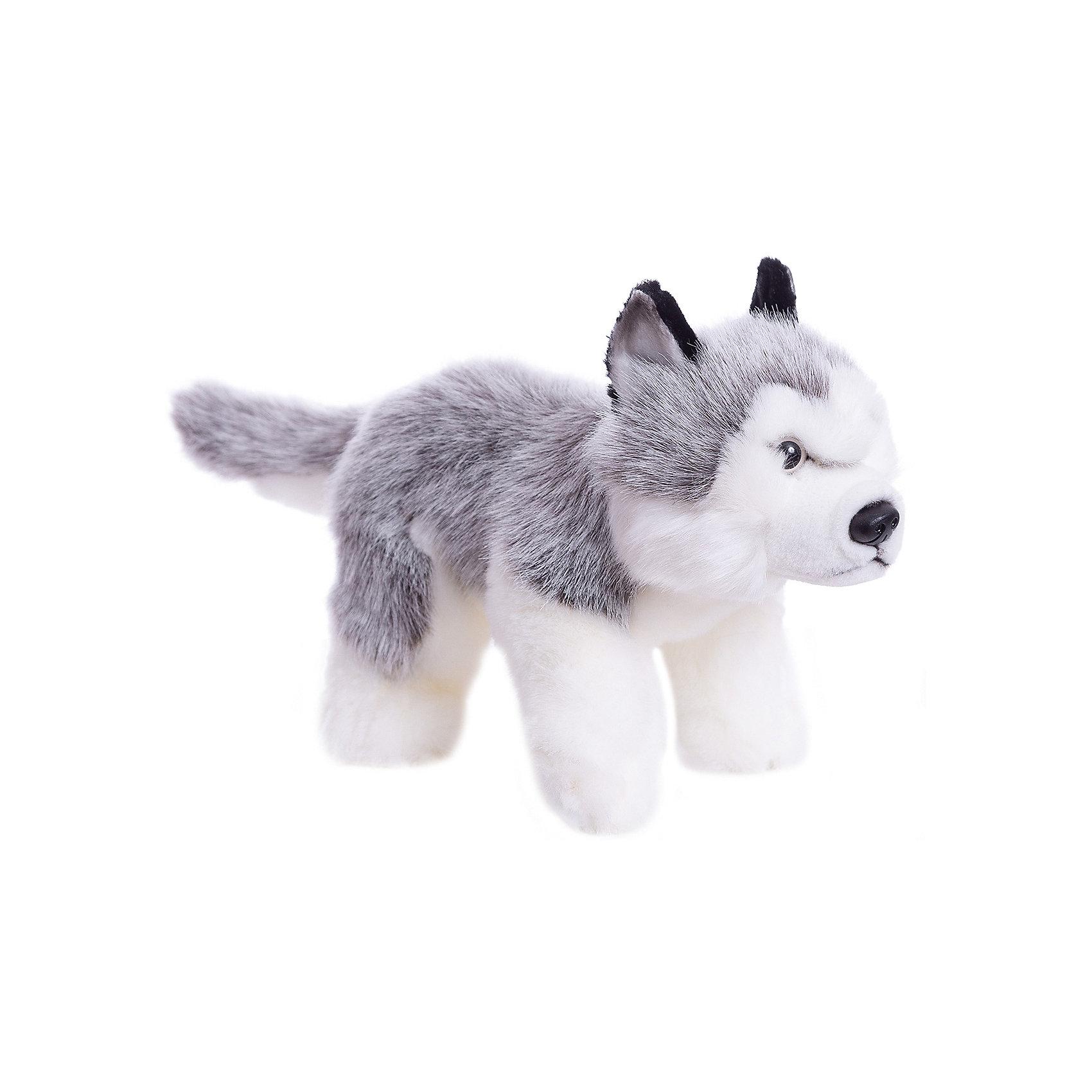 Щенок Хаски 25смКошки и собаки<br>Щенок хаски, 25 см – игрушка от знаменитого бренда Hansa, специализирующегося на выпуске мягких игрушек с высокой степенью натуралистичности. Внешний вид игрушечного щенка полностью соответствует своему реальному прототипу – собаке породы Хаски. Он выполнен из искусственного меха меланжевого серого цвета с ворсом средней длины и белого меха с коротким ворсом. Использованные материалы обладают гипоаллергенными свойствами. Внутри игрушки имеется металлический каркас, позволяющий изменять положение. <br>Игрушка относится к серии Домашние животные. <br>Мягкие игрушки от Hansa подходят для сюжетно-ролевых игр, для обучающих игр, направленных на знакомство с миром живой природы. Кроме того, их можно использовать в качестве интерьерных игрушек. Представленные у торгового бренда разнообразие игрушечных собак позволяет собрать свою коллекцию пород, которая будет радовать вашего ребенка долгое время, так как ручная работа и качественные материалы гарантируют их долговечность и прочность.<br><br>Дополнительная информация:<br><br>- Вид игр: сюжетно-ролевые игры, коллекционирование, интерьерные игрушки<br>- Предназначение: для дома, для детских развивающих центров, для детских садов<br>- Материал: искусственный мех, наполнитель ? полиэфирное волокно<br>- Размер (ДхШхВ): 25*44*13 см<br>- Вес: 6 кг<br>- Особенности ухода: сухая чистка при помощи пылесоса или щетки для одежды<br><br>Подробнее:<br><br>• Для детей в возрасте: от 3 лет <br>• Страна производитель: Филиппины<br>• Торговый бренд: Hansa<br><br>Щенка хаски, 25 см можно купить в нашем интернет-магазине.<br><br>Ширина мм: 25<br>Глубина мм: 44<br>Высота мм: 13<br>Вес г: 6000<br>Возраст от месяцев: 36<br>Возраст до месяцев: 2147483647<br>Пол: Унисекс<br>Возраст: Детский<br>SKU: 4927170
