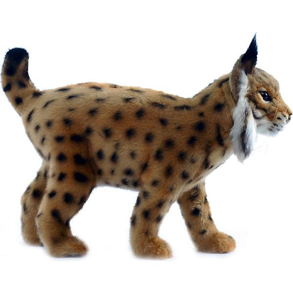 Испанская рысь, 35 смМягкие игрушки животные<br>Испанская рысь, 35 см – игрушка от знаменитого бренда Hansa, специализирующегося на выпуске мягких игрушек с высокой степенью натуралистичности. Внешний вид игрушечной рыси полностью соответствует своему реальному прототипу. Она выполнена из искусственного меха с коротким ворсом. У игрушечной рыси рыжий окрас и черные пятнышки. Использованные материалы обладают гипоаллергенными свойствами. Внутри игрушки имеется металлический каркас, позволяющий изменять положение. <br>Игрушка относится к серии Дикие животные. <br>Мягкие игрушки от Hansa подходят для сюжетно-ролевых игр, для обучающих игр, направленных на знакомство с животным миром дикой природы. Кроме того, их можно использовать в качестве интерьерных игрушек. Коллекция из нескольких игрушек позволяет создать свой домашний зоопарк, который будет радовать вашего ребенка долгое время, так как ручная работа и качественные материалы гарантируют их долговечность и прочность.<br><br>Дополнительная информация:<br><br>- Вид игр: сюжетно-ролевые игры, коллекционирование, интерьерные игрушки<br>- Предназначение: для дома, для детских развивающих центров, для детских садов<br>- Материал: искусственный мех, наполнитель ? полиэфирное волокно<br>- Размер (ДхШхВ): 35*28*13 см<br>- Вес: 590 г<br>- Особенности ухода: сухая чистка при помощи пылесоса или щетки для одежды<br><br>Подробнее:<br><br>• Для детей в возрасте: от 3 лет <br>• Страна производитель: Филиппины<br>• Торговый бренд: Hansa<br><br>Испанскую рысь, 35 см можно купить в нашем интернет-магазине.<br><br>Ширина мм: 35<br>Глубина мм: 28<br>Высота мм: 13<br>Вес г: 590<br>Возраст от месяцев: 36<br>Возраст до месяцев: 2147483647<br>Пол: Унисекс<br>Возраст: Детский<br>SKU: 4927199