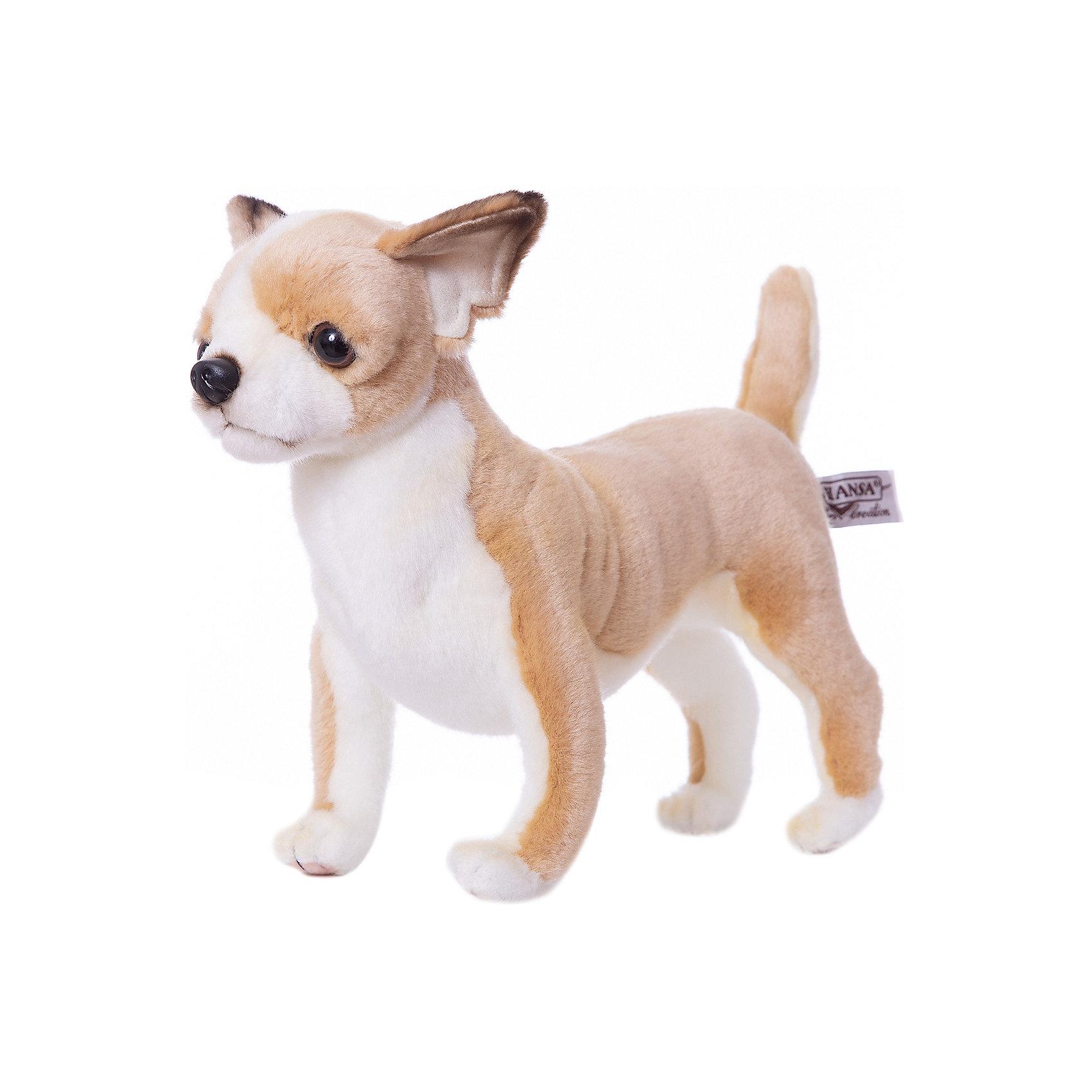 Чихуахуа, 27 смЗвери и птицы<br>Чихуахуа, 27 см – игрушка от знаменитого бренда Hansa, специализирующегося на выпуске мягких игрушек с высокой степенью натуралистичности. Внешний вид игрушечной собаки полностью соответствует своему реальному прототипу – собаке породы Чихуахуа. Она выполнена из искусственного меха светло-коричневого цвета с коротким ворсом, грудка и внутренняя часть лапок – из белого меха. Использованные материалы обладают гипоаллергенными свойствами. Внутри игрушки имеется металлический каркас, позволяющий изменять положение. <br>Игрушка относится к серии Домашние животные. <br>Мягкие игрушки от Hansa подходят для сюжетно-ролевых игр, для обучающих игр, направленных на знакомство с миром живой природы. Кроме того, их можно использовать в качестве интерьерных игрушек. Представленные у торгового бренда разнообразие игрушечных собак позволяет собрать свою коллекцию пород, которая будет радовать вашего ребенка долгое время, так как ручная работа и качественные материалы гарантируют их долговечность и прочность.<br><br>Дополнительная информация:<br><br>- Вид игр: сюжетно-ролевые игры, коллекционирование, интерьерные игрушки<br>- Предназначение: для дома, для детских развивающих центров, для детских садов<br>- Материал: искусственный мех, наполнитель ? полиэфирное волокно<br>- Размер (ДхШхВ): 27*24*11 см<br>- Вес: 900 г<br>- Особенности ухода: сухая чистка при помощи пылесоса или щетки для одежды<br><br>Подробнее:<br><br>• Для детей в возрасте: от 3 лет <br>• Страна производитель: Филиппины<br>• Торговый бренд: Hansa<br><br>Чихуахуа, 27 см можно купить в нашем интернет-магазине.<br><br>Ширина мм: 27<br>Глубина мм: 24<br>Высота мм: 11<br>Вес г: 900<br>Возраст от месяцев: 36<br>Возраст до месяцев: 2147483647<br>Пол: Унисекс<br>Возраст: Детский<br>SKU: 4927228