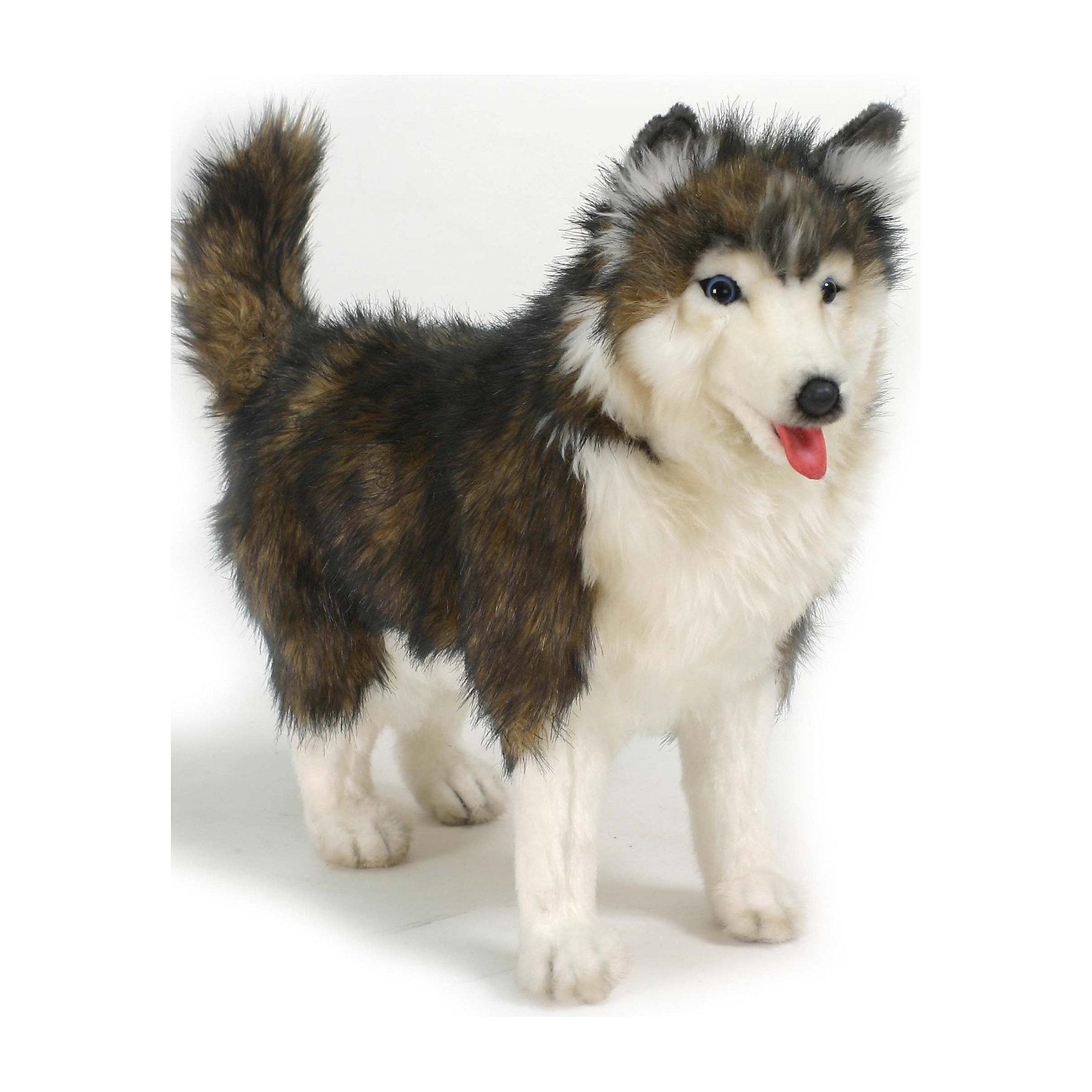 Собака породы Сибирский Хаски, 40 см, HansaКошки и собаки<br>Собака породы Сибирский Хаски, 40 см – игрушка от знаменитого бренда Hansa, специализирующегося на выпуске мягких игрушек с высокой степенью натуралистичности. Внешний вид собаки полностью соответствует своему реальному прототипу – собаке породы Хаски. Она выполнена из искусственного меха меланжевого темного цвета с ворсом средней длины и белого меха. Использованные материалы обладают гипоаллергенными свойствами. Внутри игрушки имеется металлический каркас, позволяющий изменять положение. <br>Игрушка относится к серии Домашние животные. <br>Мягкие игрушки от Hansa подходят для сюжетно-ролевых игр, для обучающих игр, направленных на знакомство с миром живой природы. Кроме того, их можно использовать в качестве интерьерных игрушек. Представленные у торгового бренда разнообразие игрушечных собак позволяет собрать свою коллекцию пород, которая будет радовать вашего ребенка долгое время, так как ручная работа и качественные материалы гарантируют их долговечность и прочность.<br><br>Дополнительная информация:<br><br>- Вид игр: сюжетно-ролевые игры, коллекционирование, интерьерные игрушки<br>- Предназначение: для дома, для детских развивающих центров, для детских садов<br>- Материал: искусственный мех, наполнитель ? полиэфирное волокно<br>- Размер (ДхШхВ): 40*15*35 см<br>- Вес: 420 г<br>- Особенности ухода: сухая чистка при помощи пылесоса или щетки для одежды<br><br>Подробнее:<br><br>• Для детей в возрасте: от 3 лет <br>• Страна производитель: Филиппины<br>• Торговый бренд: Hansa<br><br>Собаку породы Сибирский Хаски, 40 см можно купить в нашем интернет-магазине.<br><br>Ширина мм: 150<br>Глубина мм: 350<br>Высота мм: 400<br>Вес г: 380<br>Возраст от месяцев: 36<br>Возраст до месяцев: 2147483647<br>Пол: Унисекс<br>Возраст: Детский<br>SKU: 4935400