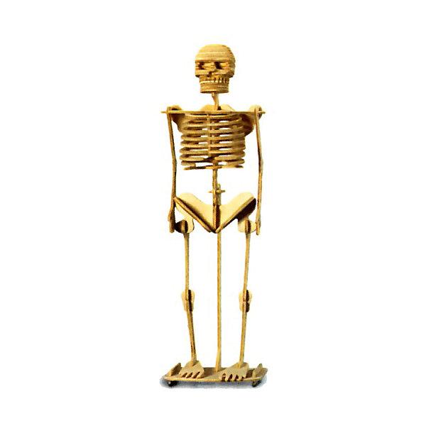 Скелет человека, Мир деревянных игрушекДеревянные модели<br>Отличный вариант подарка для интересующегося анатомией творческого ребенка - этот набор, из которого можно самому сделать красивую деревянную фигуру! Для этого нужно выдавить из пластины с деталями элементы для сборки и соединить их. Из наборов получаются красивые очень реалистичные игрушки, которые могут стать украшением комнаты.<br>Собирая их, ребенок будет развивать пространственное мышление, память и мелкую моторику. А раскрашивая готовое произведение, дети научатся подбирать цвета и будут развивать художественные навыки. Этот набор произведен из качественных и безопасных для детей материалов - дерево тщательно обработано.<br><br>Дополнительная информация:<br><br>материал: дерево;<br>цвет: бежевый;<br>элементы: пластины с деталями для сборки, схема сборки;<br>размер упаковки: 23 х 18 см.<br><br>3D-пазл Скелет человека от бренда Мир деревянных игрушек можно купить в нашем магазине.<br><br>Ширина мм: 225<br>Глубина мм: 30<br>Высота мм: 180<br>Вес г: 450<br>Возраст от месяцев: 36<br>Возраст до месяцев: 144<br>Пол: Унисекс<br>Возраст: Детский<br>SKU: 4969167