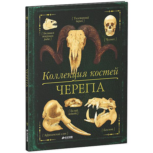 Коллекция костей Черепа, К. де ла БедуайерДетские энциклопедии<br>Здравствуй, юный естествоиспытатель!  В этой книге ты познакомишься с коллекцией черепов некоторых удивительных животных. Ты узнаешь, как только по черепу можно определить, что собой представляет, то или иное животное, и почему черепа разных животных такие разные. А еще... Ты увидишь вблизи длинные бивни слонов. Узнаешь, зачем птицам-носорогам такой большой клюв. Поймешь, почему бегемот так широко разевает пасть.<br><br>Информация для родителей: <br><br>Удивительные научные факты, фотографии и копии скелетов животных, от гиены и обезьяны до человека, тонко прорисованные и качественные иллюстрации - все это делает  Коллекция костей. Черепа интересной и неповторимой книгой. Во второй книге серии Коллекция костей, адресованной детям в возрасте от 7-13 лет, вы найдет не только фотографии и рисунки костей животных, но и увлекательные информационные блоки, схемы и рисунки, занимательные факты, которые будут интересны и родителям. И еще одно преимущество - книга стилизована под старинное издание и станет прекрасным подарком для любопытных школьников. <br><br>Изюминка книжки: <br><br>- более 50-ти животных на страницах атласа - великолепное подарочное издание для детей от 7 лет. <br>- отличное качество полиграфии, твердая обложка и плотные страницы. <br>- натуралистичные иллюстрации. <br>- из каждого разворота можно узнать: строение черепа животного (названия и расположение костей), места обитания, размер животного, повадки и множество других интересных фактов! <br>- удобный алфавитный указатель в конце атласа.<br><br>Дополнительная информация:<br><br>- издательство: clever<br>- возраст: от 7 лет<br>- пол: для мальчиков и девочек<br>- материал : бумага, картон.<br>- количество страниц: 96.<br>- размер книги: 28.5 * 22 * 1 см.<br>- автор: К. Бедуайер де ла.<br>- иллюстрации: цветные.<br>- тип обложки: твердый.<br>- страна обладатель бренда: Россия.<br>- вес в упаковке: 462 г<br><br>Книгу Коллекция костей Череп