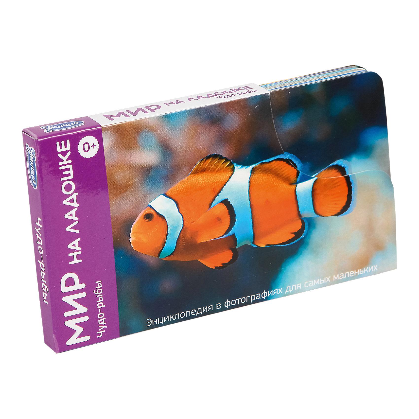 Мир на ладошке Чудо-рыбы (выпуск 5)Обучающие карточки<br>Мир на ладошке Чудо-рыбы – тематические карточки с интересной информацией о мире.<br>Каждая тематическая карточка помогает ребенку развить внимание, логику, эрудицию, воображение, образное мышление, интеллект, память и многое другое. Ребенок сможет узнавать слова, которые раньше не слышал, получить ответы на самые интересные вопросы и массу удовольствие от знаний, приобретенных с помощью игры. Тема данного набора: рыбы. В комплекте 24 карточки с изображение и текстом, а также карточка с инструкцией для родителей.<br><br>Дополнительная информация:<br><br>- в наборе: 24 карточки<br><br>Мир на ладошке Чудо-рыбы можно купить в нашем интернет магазине.<br><br>Ширина мм: 100<br>Глубина мм: 15<br>Высота мм: 180<br>Вес г: 190<br>Возраст от месяцев: 0<br>Возраст до месяцев: 84<br>Пол: Унисекс<br>Возраст: Детский<br>SKU: 4993621