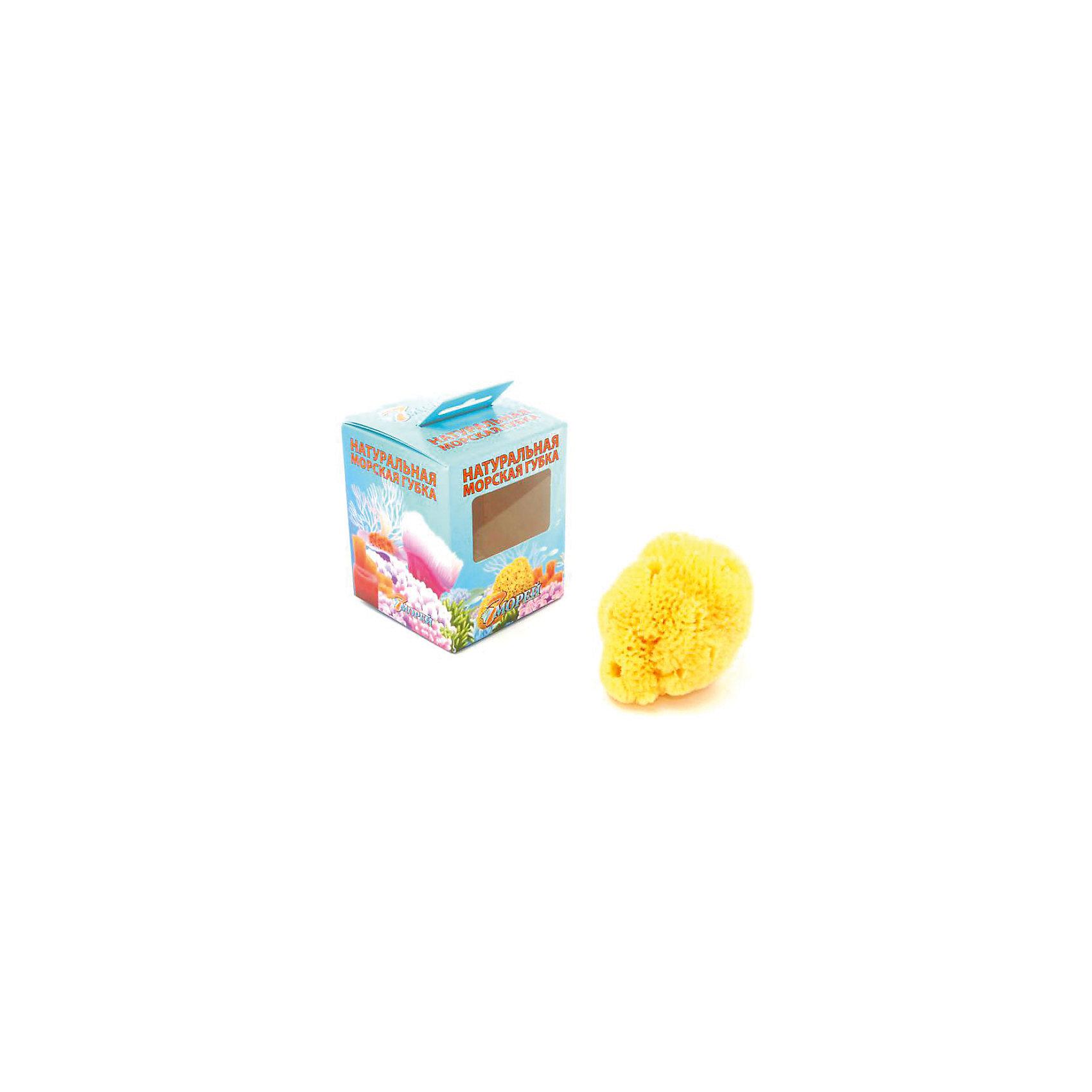 Губка натуральная морская детская (3.0 - 3.5 дюйма) Хард Тайп, 7 морейПолотенца, мочалки, халаты<br>Губка натуральная морская детская (3.0 - 3.5 дюйма) Хард Тайп, 7 морей - впустите атмосферу моря и отдыха в ваш дом! Эта особенная мягкая губка натурального происхождения имеет бактерицидные свойства и хорошо подойдет для мытья детей с момента появления на свет. Губка очень бережно и деликатно очищает нежную кожу, благотворно влияя на нее. Морская губка подойдет и родителям, она гипоаллергенна, не высушивает кожу и не провоцирует высыпаний. Пользуясь такой губочкой вы обеспечите более полную чистоту и сэкономите используемое средство для очищения кожи. Такие губки не любят воду очень высокой температуры. Производители не советуют сушку под прямыми солнечными лучами, хранение губки в шапочках для плавания или полиэтиленовых пакетах, а также отжим путем скручивая. Рекомендуется хорошо помыть губку мягким моющим мылом и аккуратно выжать воду.<br><br>Дополнительная информация:<br>- Размер:  примерно 8 * 8 см.<br><br>Губку натуральную морскую детскую (3.0 - 3.5 дюйма) Хард Тайп, 7 морей можно купить в нашем интернет-магазине.<br>Подробнее:<br>• Для детей в возрасте: от 0 лет<br>• Номер товара: 5008281 <br>Страна производитель: Российская Федерация<br><br>Ширина мм: 100<br>Глубина мм: 100<br>Высота мм: 50<br>Вес г: 100<br>Возраст от месяцев: 0<br>Возраст до месяцев: 36<br>Пол: Унисекс<br>Возраст: Детский<br>SKU: 5008281
