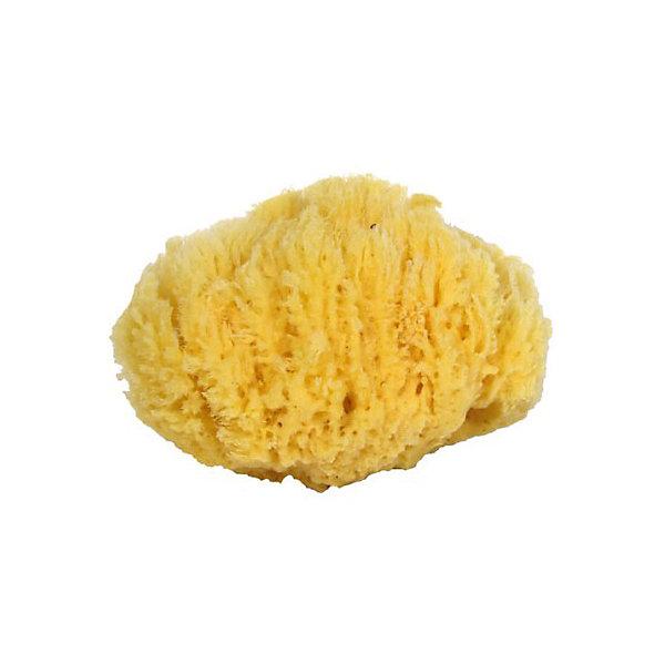 Губка натуральная морская детская (4.5 - 5.0 дюймов) Файн Силк, 7 морейТовары для купания<br>Губка натуральная морская детская (4.5 - 5.0 дюймов) Файн Силк, 7 морей - впустите атмосферу моря и отдыха в ваш дом! Эта особенная мягкая губка натурального происхождения имеет бактерицидные свойства и хорошо подойдет для мытья детей с момента появления на свет. Губка очень бережно и деликатно очищает нежную кожу, благотворно влияя на нее. Морская губка подойдет и родителям, она гипоаллергенна, не высушивает кожу и не провоцирует высыпаний. Пользуясь такой губочкой вы обеспечите более полную чистоту и сэкономите используемое средство для очищения кожи. Губки Файн Силк особенного мягки, в виду маленьких пор, и прослужат вам долго (до двух лет). Такие губки не любят воду очень высокой температуры. Производители не советуют сушку под прямыми солнечными лучами, хранение губки в шапочках для плавания или полиэтиленовых пакетах, а также отжим путем скручивая. Рекомендуется хорошо помыть губку мягким моющим мылом и аккуратно выжать воду.<br><br>Дополнительная информация:<br>- Размер:  примерно 11 * 13 см.<br><br>Губку натуральную морскую детскую (4.5 - 5.0 дюймов) Файн Силк, 7 морей можно купить в нашем интернет-магазине.<br>Подробнее:<br>• Для детей в возрасте: от 0 лет<br>• Номер товара: 5008282 <br>Страна производитель: Российская Федерация<br><br>Ширина мм: 100<br>Глубина мм: 100<br>Высота мм: 50<br>Вес г: 100<br>Возраст от месяцев: 0<br>Возраст до месяцев: 36<br>Пол: Унисекс<br>Возраст: Детский<br>SKU: 5008282