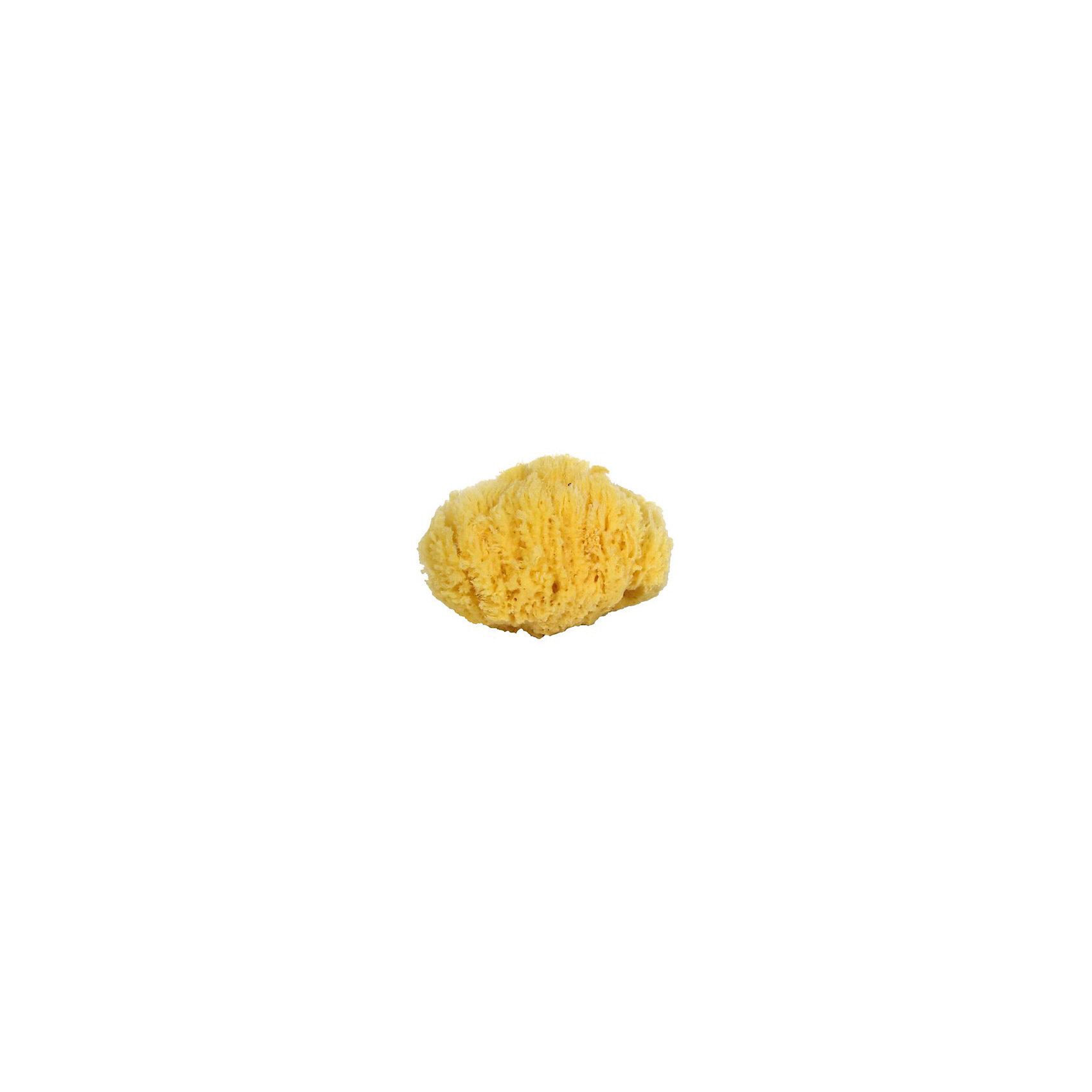 Губка натуральная морская детская (4.5 - 5.0 дюймов) Файн Силк, 7 морейПолотенца, мочалки, халаты<br>Губка натуральная морская детская (4.5 - 5.0 дюймов) Файн Силк, 7 морей - впустите атмосферу моря и отдыха в ваш дом! Эта особенная мягкая губка натурального происхождения имеет бактерицидные свойства и хорошо подойдет для мытья детей с момента появления на свет. Губка очень бережно и деликатно очищает нежную кожу, благотворно влияя на нее. Морская губка подойдет и родителям, она гипоаллергенна, не высушивает кожу и не провоцирует высыпаний. Пользуясь такой губочкой вы обеспечите более полную чистоту и сэкономите используемое средство для очищения кожи. Губки Файн Силк особенного мягки, в виду маленьких пор, и прослужат вам долго (до двух лет). Такие губки не любят воду очень высокой температуры. Производители не советуют сушку под прямыми солнечными лучами, хранение губки в шапочках для плавания или полиэтиленовых пакетах, а также отжим путем скручивая. Рекомендуется хорошо помыть губку мягким моющим мылом и аккуратно выжать воду.<br><br>Дополнительная информация:<br>- Размер:  примерно 11 * 13 см.<br><br>Губку натуральную морскую детскую (4.5 - 5.0 дюймов) Файн Силк, 7 морей можно купить в нашем интернет-магазине.<br>Подробнее:<br>• Для детей в возрасте: от 0 лет<br>• Номер товара: 5008282 <br>Страна производитель: Российская Федерация<br><br>Ширина мм: 100<br>Глубина мм: 100<br>Высота мм: 50<br>Вес г: 100<br>Возраст от месяцев: 0<br>Возраст до месяцев: 36<br>Пол: Унисекс<br>Возраст: Детский<br>SKU: 5008282