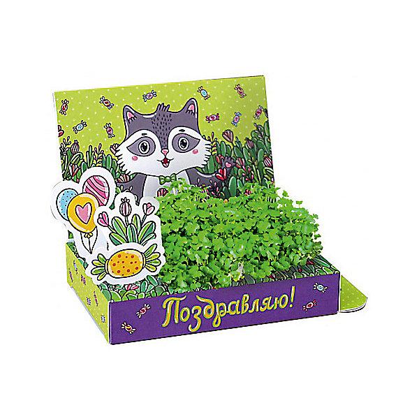 Набор для выращивания Поздравляю- Енот Happy PlantВыращивание растений<br>Подарочный набор Весёлые моменты. Поздравляю! (Енот), Happy Plant.<br><br>Характеристики:<br><br>• возможность вырастить настоящую травку, не выходя из дома<br>• прост в использовании<br>• подходит в качестве подарка<br>• есть место для поздравительной надписи<br>• безопасные материалы<br>• гарантия качества<br>• в комплекте: открытка, 3 фигурки, семена, контейнер для растений, агроткань<br>• размер упаковки: 15х8х2,5 см<br>• вес: 30 грамм<br><br>Что может быть приятнее подарка, сделанного своими руками? Подарочный набор Веселые моменты поможет вам сделать живую открытку с поздравлениями. Спереди открытка украшены милым енотом, а сзади вы найдете специальное место для поздравлений и пожеланий. Посадите семена в агроткань, смоченную водой, полейте их - через несколько дней живые растения преобразят и оживят картинку.. Такой подарок непременно понравится каждому!<br><br>Подарочный набор Веселые моменты Поздравляю! (Енот), Happy Plant вы можете купить в нашем интернет-магазине.<br>Ширина мм: 150; Глубина мм: 80; Высота мм: 25; Вес г: 30; Возраст от месяцев: 168; Возраст до месяцев: 240; Пол: Унисекс; Возраст: Детский; SKU: 5053961;