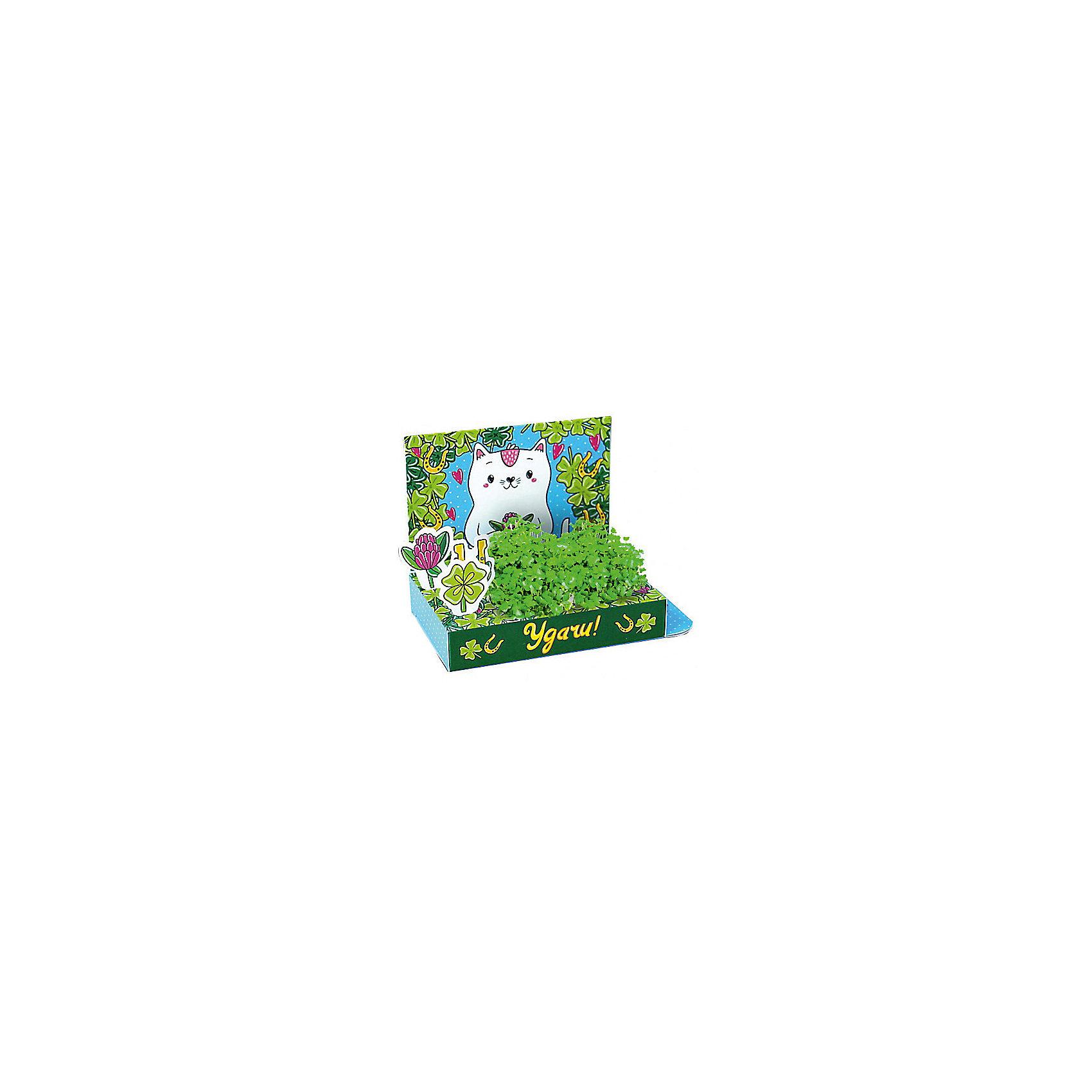 Набор для выращивания Живая открытка - Удачи! Кот, Happy PlantНаборы для выращивания растений<br>Подарочный набор Веселые моменты. Удачи! (Кот), Happy Plant.<br><br><br>Характеристики:<br><br>• возможность вырастить настоящую травку, не выходя из дома<br>• прост в использовании<br>• подходит в качестве подарка<br>• есть место для поздравительной надписи<br>• безопасные материалы<br>• гарантия качества<br>• в комплекте: открытка, 3 фигурки, семена, контейнер для растений, агроткань<br>• размер упаковки: 15х8х2,5 см<br>• вес: 30 грамм<br><br>Что может быть приятнее подарка, сделанного своими руками? Подарочный набор Веселые моменты поможет вам сделать живую открытку с поздравлениями. Спереди открытка украшены милым котиком, а сзади вы найдете специальное место для поздравлений и пожеланий. Посадите семена в агроткань, смоченную водой, полейте их - через несколько дней живые растения преобразят и оживят картинку. Такой подарок непременно понравится каждому!<br><br>Подарочный набор Веселые моменты Удачи! (Кот), Happy Plant вы можете купить в нашем интернет-магазине.<br><br>Ширина мм: 150<br>Глубина мм: 80<br>Высота мм: 25<br>Вес г: 30<br>Возраст от месяцев: 168<br>Возраст до месяцев: 240<br>Пол: Унисекс<br>Возраст: Детский<br>SKU: 5053963