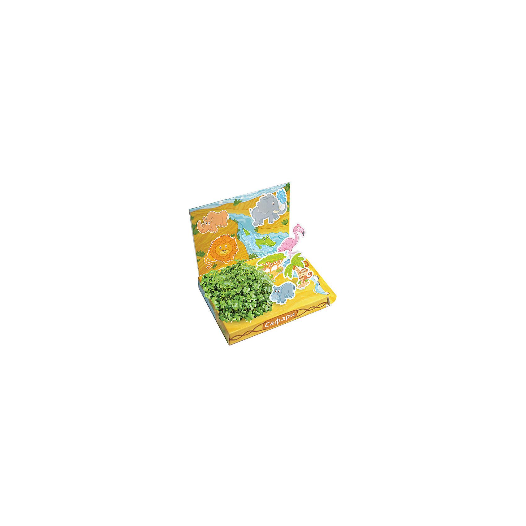 Набор для выращивания Сафари, Happy PlantВыращивание растений<br>Детский развивающий набор для выращивания Сафари, Happy Plant.<br><br>Характеристики:<br><br>• возможность вырастить настоящую травку, не выходя из дома<br>• прост в использовании<br>• подходит в качестве подарка<br>• безопасные материалы<br>• гарантия качества<br>• в комплекте: наклейки, 3 фигурки, семена, контейнер для растений, агроткань<br>• размер упаковки: 15х11х2,5 см<br>• вес: 30 грамм<br><br>Набор для выращивания Сафари станет прекрасным подарком для ребенка. В процессе игры ребенок научит названия некоторых животных, научится выращивать растения и ухаживать за ними. Семена растут на специальной агроткани, их требует поливать каждый день. Через несколько дней контейнер с фигурками будет украшен красивым мини-садиком. Этот набор отлично подойдет для знакомства с живой природой!<br><br>Детский развивающий набор для выращивания Сафари, Happy Plant вы можете купить в нашем интернет-магазине.<br><br>Ширина мм: 175<br>Глубина мм: 115<br>Высота мм: 25<br>Вес г: 30<br>Возраст от месяцев: 168<br>Возраст до месяцев: 240<br>Пол: Унисекс<br>Возраст: Детский<br>SKU: 5053964