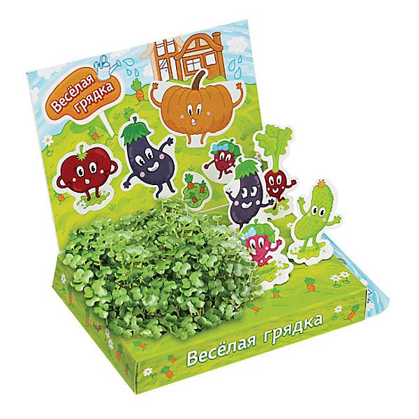 Набор для выращивания Веселая грядка Happy PlantВыращивание растений<br>Детский развивающий набор для выращивания Веселая грядка, Happy Plant.<br><br>Характеристики:<br><br>• возможность вырастить настоящую травку, не выходя из дома<br>• прост в использовании<br>• подходит в качестве подарка<br>• безопасные материалы<br>• гарантия качества<br>• в комплекте: наклейки, 3 фигурки, семена, контейнер для растений, агроткань<br>• размер упаковки: 15х11х2,5 см<br>• вес: 30 грамм<br><br>Набор Веселая грядка не только познакомит ребенка с различными овощами, но и поможет ему самостоятельно вырастить первую травку. Присоедините забавные фигурки к контейнеру и засыпьте семена на агроткань. Уже через несколько дней вы сможете увидеть первые ростки. Не забывайте поливать растения! Этот мини-сад вызовет море восторга у вашего ребенка!<br><br>Детский развивающий набор для выращивания Веселая грядка, Happy Plant вы можете приобрести в нашем интернет-магазине.<br>Ширина мм: 175; Глубина мм: 115; Высота мм: 25; Вес г: 30; Возраст от месяцев: 168; Возраст до месяцев: 240; Пол: Унисекс; Возраст: Детский; SKU: 5053965;