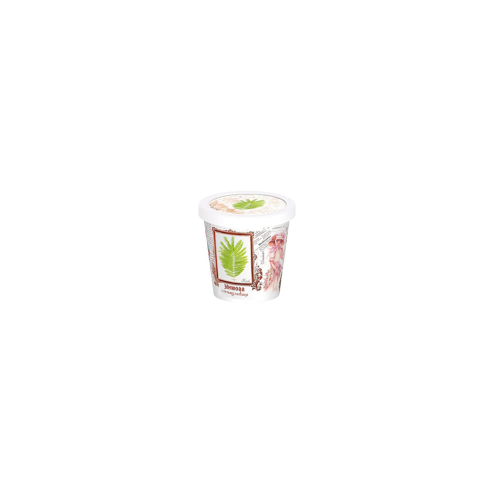 Набор для выращивания Мимоза Rostok VisaНаборы для выращивания растений<br>Мимоза, Rostok Visa.<br><br>Характеристики:<br><br>• вы сможете выращивать растения у себя дома<br>• экологически чистая продукция<br>• не содержит химикаты<br>• отличная всхожесть<br>• приятный дизайн<br>• в комплекте: горшочек, пакет с семенами, грунт, инструкция<br>• размер упаковки: 7,5х7,5х12 см<br>• вес: 275 грамм<br><br>Если вы хотите продлить дачный сезон, то набор Мимоза отлично подойдет вам! С его помощью вы сможете вырастить мимозу в домашних условиях. Продукция качественная и экологически чистая, что гарантирует высокую всхожесть. Подробная инструкция расскажет как правильно ухаживать за растением. Прекрасный подарок любителям садоводства!<br><br>Набор Мимоза, Rostok Visa можно купить в нашем интернет-магазине.<br><br>Ширина мм: 120<br>Глубина мм: 75<br>Высота мм: 75<br>Вес г: 267<br>Возраст от месяцев: 168<br>Возраст до месяцев: 240<br>Пол: Унисекс<br>Возраст: Детский<br>SKU: 5053992