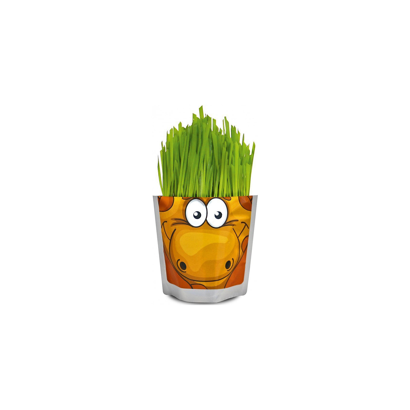 Набор для выращивания Сафари - Жираф Happy PlantHappy Plant Жираф.<br><br>Характеристики:<br><br>• научит ребенка выращивать растения и ухаживать за ними<br>• развивает фантазию <br>• яркий оригинальный дизайн<br>• качественные семена<br>• в комплекте: пакет-горшочек, органический субстрат для посадки, семена, лопатка, инструкция<br>• размер: 18х13 см<br>• объем: 500 мл<br>• Вес: 230 грамм<br><br>Забавный Жираф научит ребенка ухаживать за растениями. С помощью инструкции ребенок с радостью посадит семена и будет наблюдать за ростом травки. Ее можно подстригать, придавая различные формы. Кроме того, Вы сможете придумывать жирафу различные прически. Такой веселый жираф должен быть у каждого юного садовода!<br><br>Happy Plant Жираф, Вы можете купить в нашем интернет-магазине.<br><br>Ширина мм: 180<br>Глубина мм: 130<br>Высота мм: 80<br>Вес г: 230<br>Возраст от месяцев: 168<br>Возраст до месяцев: 240<br>Пол: Унисекс<br>Возраст: Детский<br>SKU: 5053994