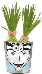 Бумбарам Набор для выращивания Сафари - Зебра Happy Plant