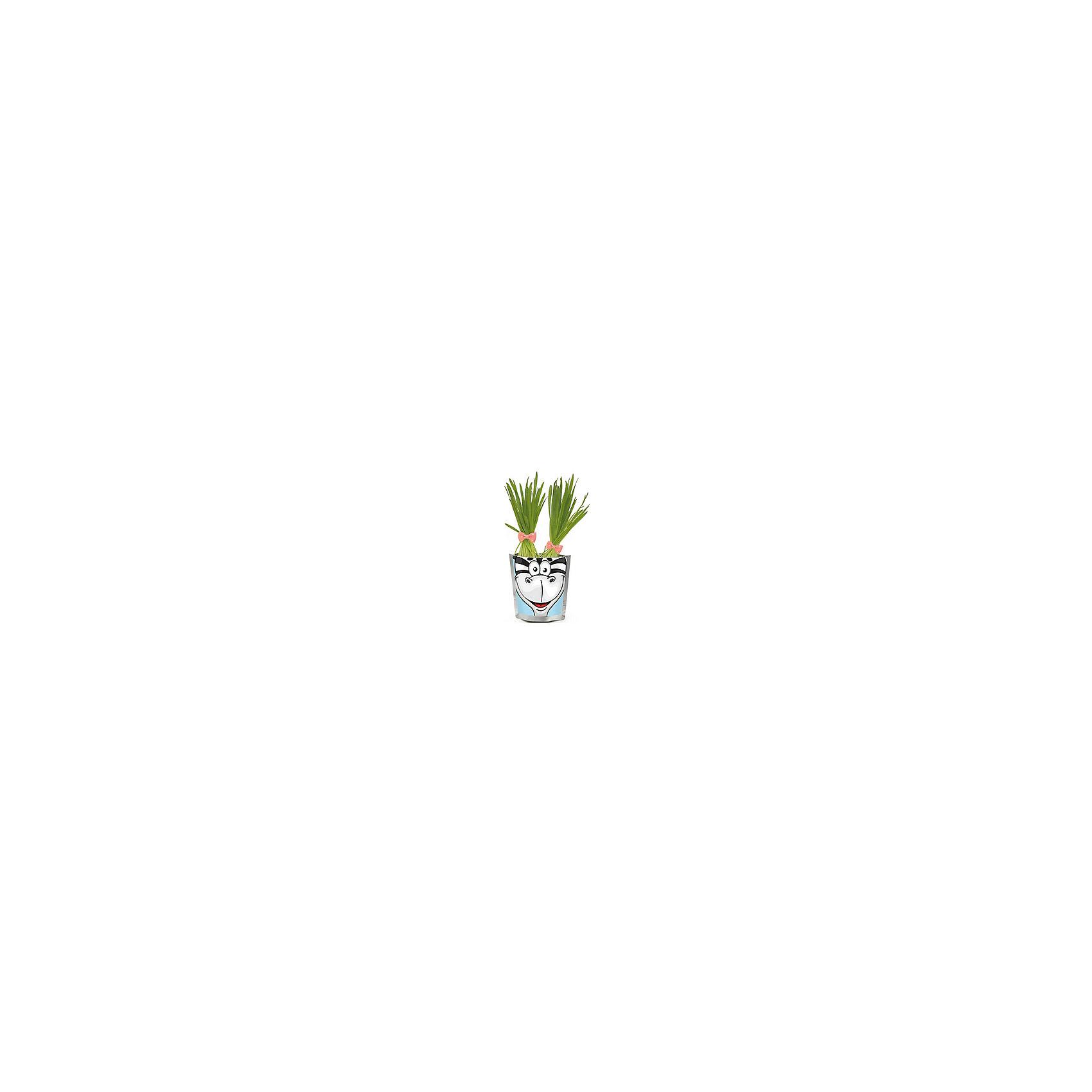 Happy Plant ЗебраВ наборах серии  - овес, который вырастает очень быстро, травка получается плотная, густая, зеленая, красивая уже через 3 дня. Детям очень нравится делать прическу своему зеленому питомцу: травку можно подстригать ножницами, создавать разные формы, можно завязывать резинками хвостики, можно даже заплетать зеленые косички!<br><br>Ширина мм: 180<br>Глубина мм: 130<br>Высота мм: 80<br>Вес г: 230<br>Возраст от месяцев: 168<br>Возраст до месяцев: 240<br>Пол: Унисекс<br>Возраст: Детский<br>SKU: 5053995