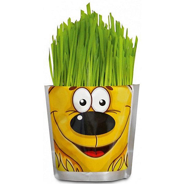Набор для выращивания Сафари - Львенок Happy PlantВыращивание растений<br>Happy Plant Львенок.<br><br>Характеристики:<br><br>• научит ребенка выращивать растения и ухаживать за ними<br>• развивает фантазию <br>• яркий оригинальный дизайн<br>• качественные семена<br>• в комплекте: пакет-горшочек, органический субстрат для посадки, семена, лопатка, инструкция<br>• размер: 18х13 см<br>• объем: 500 мл<br>• Вес: 230 грамм<br><br>Забавный Львенок научит ребенка ухаживать за растениями. С помощью инструкции ребенок с радостью посадит семена и будет наблюдать за ростом травки. Ее можно подстригать, придавая различные формы. Кроме того, Вы сможете придумывать львенку различные прически. Такой веселый львенок должен быть у каждого юного садовода!<br><br>Happy Plant Львенок, Вы можете купить в нашем интернет-магазине.<br>Ширина мм: 180; Глубина мм: 130; Высота мм: 80; Вес г: 230; Возраст от месяцев: 168; Возраст до месяцев: 240; Пол: Унисекс; Возраст: Детский; SKU: 5053996;