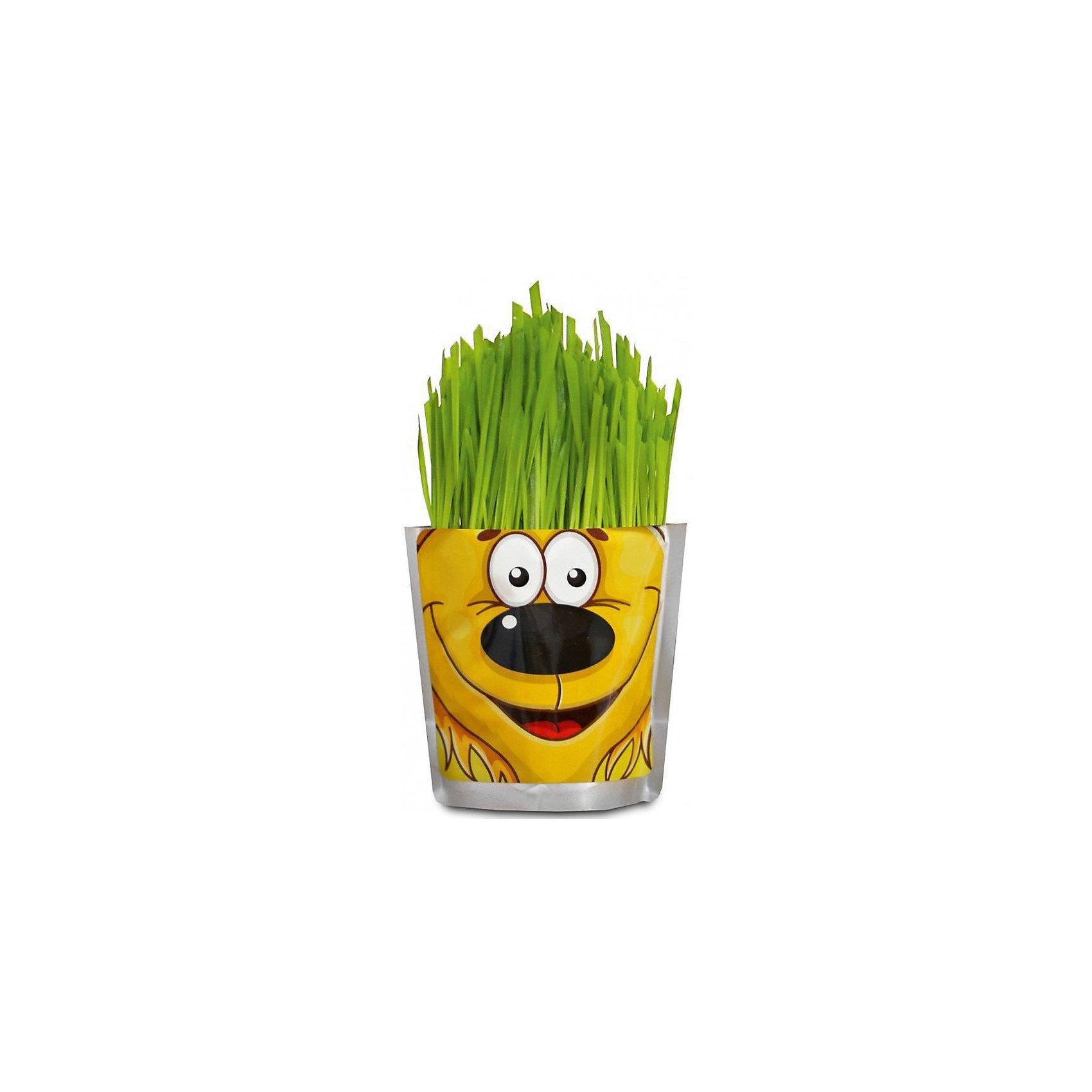 Набор для выращивания Сафари - Львенок Happy PlantНаборы для выращивания растений<br>Happy Plant Львенок.<br><br>Характеристики:<br><br>• научит ребенка выращивать растения и ухаживать за ними<br>• развивает фантазию <br>• яркий оригинальный дизайн<br>• качественные семена<br>• в комплекте: пакет-горшочек, органический субстрат для посадки, семена, лопатка, инструкция<br>• размер: 18х13 см<br>• объем: 500 мл<br>• Вес: 230 грамм<br><br>Забавный Львенок научит ребенка ухаживать за растениями. С помощью инструкции ребенок с радостью посадит семена и будет наблюдать за ростом травки. Ее можно подстригать, придавая различные формы. Кроме того, Вы сможете придумывать львенку различные прически. Такой веселый львенок должен быть у каждого юного садовода!<br><br>Happy Plant Львенок, Вы можете купить в нашем интернет-магазине.<br><br>Ширина мм: 180<br>Глубина мм: 130<br>Высота мм: 80<br>Вес г: 230<br>Возраст от месяцев: 168<br>Возраст до месяцев: 240<br>Пол: Унисекс<br>Возраст: Детский<br>SKU: 5053996
