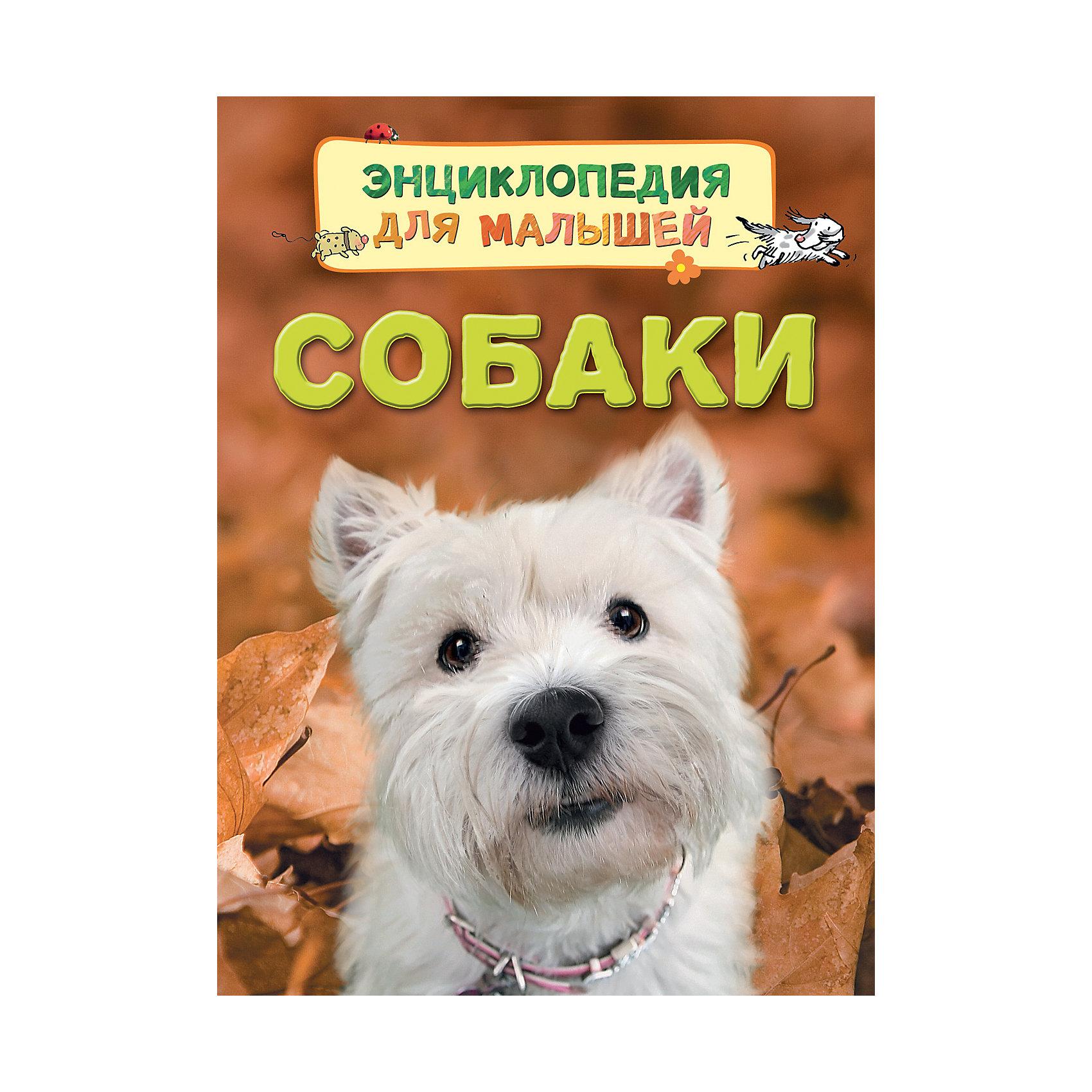 Росмэн Энциклопедия для малышей Собаки иллюстрированная книга о собаках