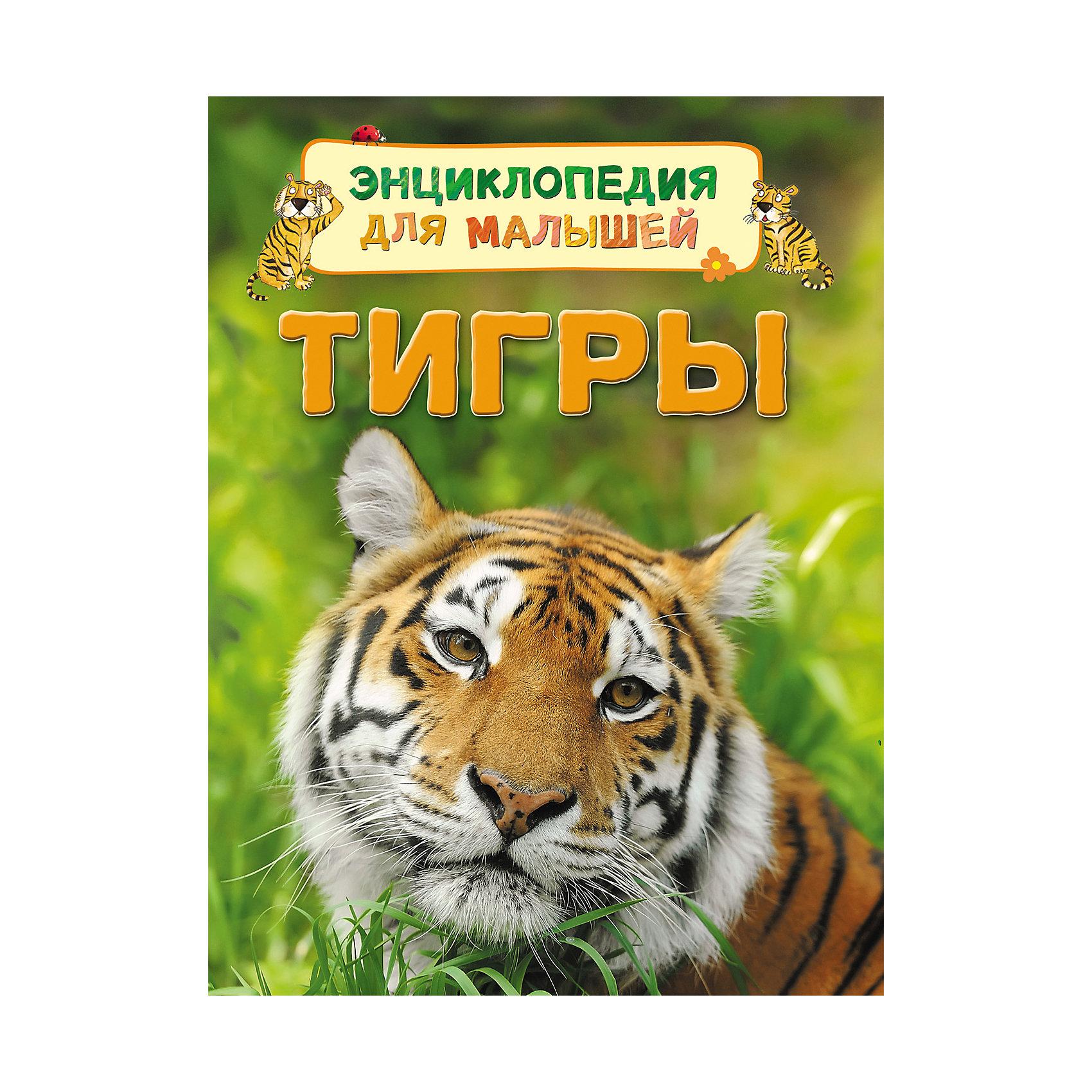 Энциклопедия для малышей ТигрыЭнциклопедии о животных<br>Энциклопедия для малышей Тигры<br><br>Характеристики:<br><br>- издательство Росмэн<br>- количество страниц: 32<br>- формат: 22 * 0,7 * 17 см.<br>- Тип обложки: 7Бц – твердая целлофинированная<br>- Иллюстрации: цветные<br>- вес: 190 гр.<br><br>Книга Тигры из серии Энциклопедия для малышей придет по вкусу как любителям серии, так и новичкам. Эта детская книга включает в себя множество цветных иллюстраций, которые делают информацию в книге интересной, наглядной и запоминающейся. Книга расскажет о тиграх и какие они бывают, о том, как они произошли и где они обитают. Книга расскажет о строении тела тигров и об особенностях их жизни. Энциклопедия расскажет о маленьких тигрятах и поможет понять в чем сходства и отличия тигров от домашних кошек.<br><br>Энциклопедию для малышей Тигры можно купить в нашем интернет-магазине.<br><br>Ширина мм: 220<br>Глубина мм: 167<br>Высота мм: 7<br>Вес г: 190<br>Возраст от месяцев: 36<br>Возраст до месяцев: 72<br>Пол: Унисекс<br>Возраст: Детский<br>SKU: 5109700