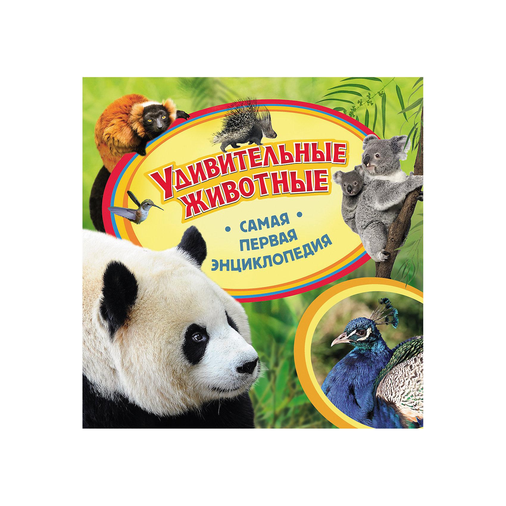 Самая первая энциклопедия Удивительные животныеЭнциклопедии о животных<br>Самая первая энциклопедия Удивительные животные <br><br>Характеристики:<br><br>- издательство Росмэн<br>- количество страниц: 36<br>- формат: 23 * 0,8 * 23 см.<br>- Тип обложки: 7Бц – твердая целлофинированная<br>- Иллюстрации: цветные<br>- вес: 300 гр.<br><br>Книга Удивительные животные из серии Самая первая энциклопедия придет по вкусу как любителям серии, так и новичкам. Эта детская книга включает в себя множество цветных иллюстраций, которые делают информацию в книге интересной, наглядной и запоминающейся. Книга расскажет о самых интересных видах животных от самых маленьких птичек колибри до горбатых верблюдов пустынь. Вопросы почемучки теперь решать легче с помощью этой книги. Энциклопедия поможет малышу узнать мир больше, расширить кругозор и словарный запас. <br><br>Самую первую энциклопедию Удивительные животные можно купить в нашем интернет-магазине.<br><br>Ширина мм: 225<br>Глубина мм: 225<br>Высота мм: 6<br>Вес г: 298<br>Возраст от месяцев: 36<br>Возраст до месяцев: 72<br>Пол: Унисекс<br>Возраст: Детский<br>SKU: 5109712