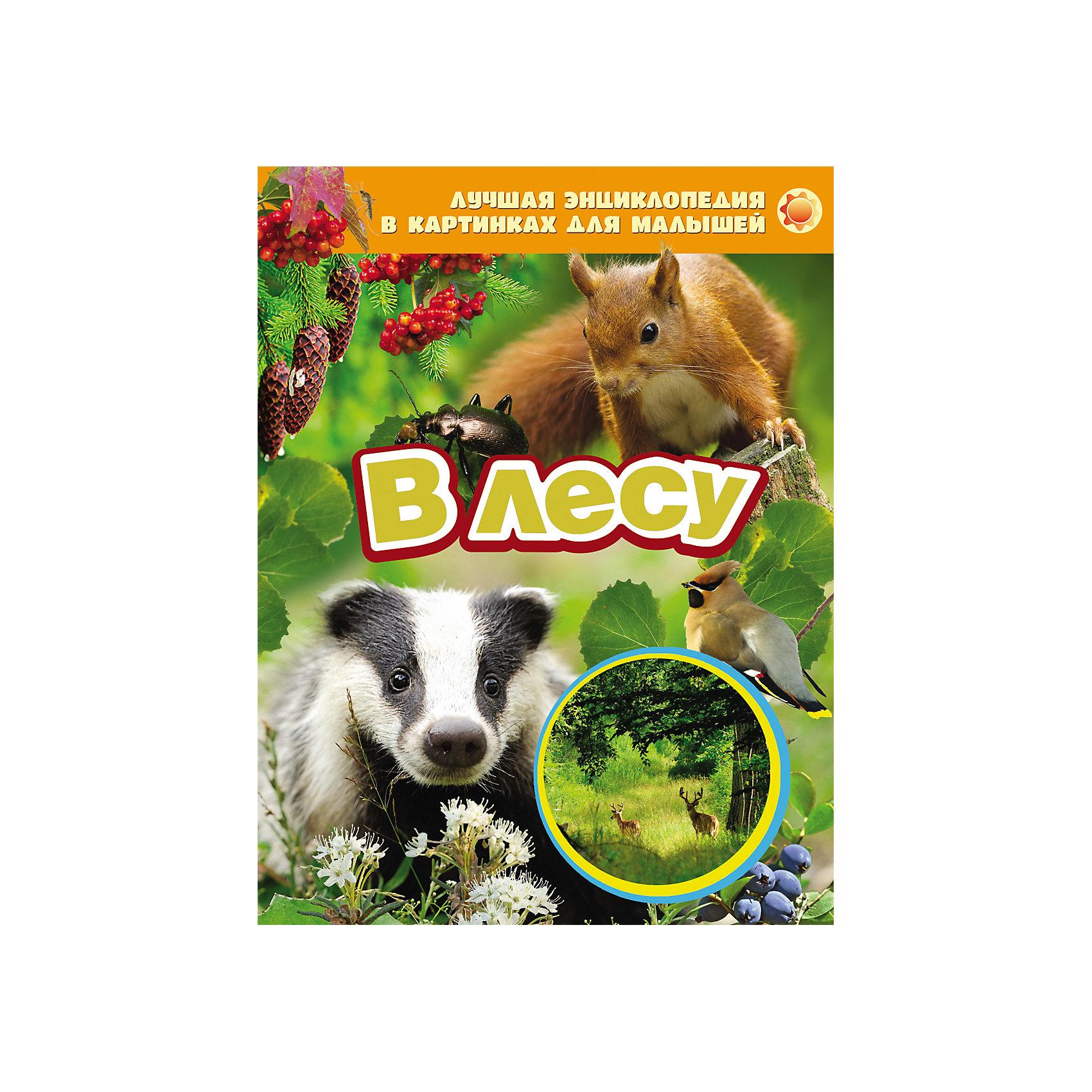 В лесуЭнциклопедии о животных<br>Характеристики товара:<br><br>- цвет: разноцветный;<br>- материал: бумага;<br>- страниц: 24;<br>- формат: 20 х 26 см;<br>- обложка: твердая;<br>- цветные иллюстрации.<br><br>Эта интересная книга с иллюстрациями станет отличным подарком для ребенка. Она содержит в себе яркие фотографии, которые помогут малышам познакомиться со многими предметами из окружающего мира.<br>Чтение и рассматривание картинок даже в юном возрасте помогает ребенку развивать зрительную память, концентрацию внимания и воображение. Издание произведено из качественных материалов, которые безопасны даже для самых маленьких.<br><br>Энциклопедию в картинках для малышей В лесу от компании Росмэн можно купить в нашем интернет-магазине.<br><br>Ширина мм: 265<br>Глубина мм: 205<br>Высота мм: 7<br>Вес г: 291<br>Возраст от месяцев: 0<br>Возраст до месяцев: 36<br>Пол: Унисекс<br>Возраст: Детский<br>SKU: 5109954