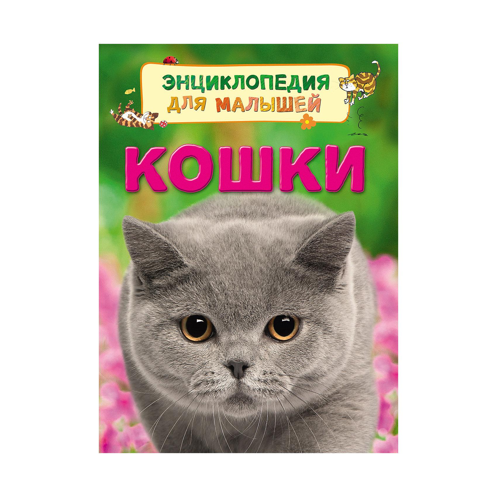 Кошки (Энциклопедия для малышей)Характеристики товара:<br><br>- цвет: разноцветный;<br>- материал: бумага;<br>- страниц: 32;<br>- формат: 22 х 17 см;<br>- обложка: твердая;<br>- цветные иллюстрации.<br><br>Эта интересная книга с иллюстрациями станет отличным подарком для ребенка. Она содержит в себе ответы на вопросы, которые интересуют малышей. Всё представлено в очень простой форме! Талантливый иллюстратор дополнил книгу качественными рисунками, которые помогают ребенку понять суть многих вещей в нашем мире. Удивительные и интересные факты помогут привить любовь к учебе!<br>Чтение - отличный способ активизации мышления, оно помогает ребенку развивать зрительную память, концентрацию внимания и воображение. Издание произведено из качественных материалов, которые безопасны даже для самых маленьких.<br><br>Книгу Кошки (Энциклопедия для малышей) от компании Росмэн можно купить в нашем интернет-магазине.<br><br>Ширина мм: 220<br>Глубина мм: 167<br>Высота мм: 7<br>Вес г: 190<br>Возраст от месяцев: 36<br>Возраст до месяцев: 72<br>Пол: Унисекс<br>Возраст: Детский<br>SKU: 5109959