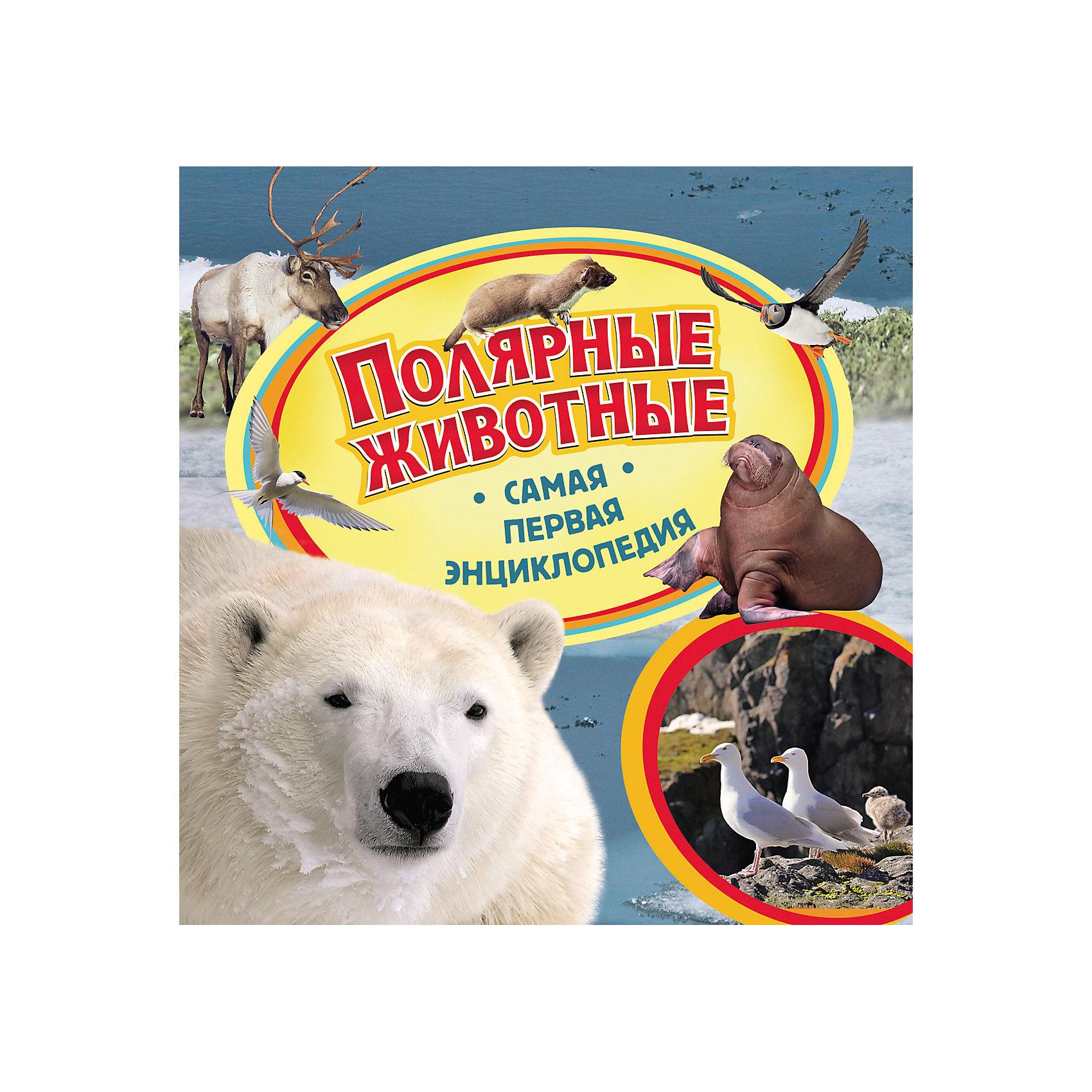Полярные животные, Самая первая энциклопедияЭнциклопедии о животных<br>Характеристики товара:<br><br>- цвет: разноцветный;<br>- материал: бумага;<br>- страниц: 36;<br>- формат: 22 х 23 см;<br>- обложка: твердая;<br>- цветные иллюстрации.<br><br>Эта интересная книга с иллюстрациями станет отличным подарком для ребенка. Она содержит в себе ответы на вопросы, которые интересуют малышей. Всё представлено в очень простой форме! Талантливый иллюстратор дополнил книгу качественными рисунками, которые помогают ребенку понять суть многих вещей в нашем мире. Удивительные и интересные факты помогут привить любовь к учебе!<br>Чтение - отличный способ активизации мышления, оно помогает ребенку развивать зрительную память, концентрацию внимания и воображение. Издание произведено из качественных материалов, которые безопасны даже для самых маленьких.<br><br>Книгу Полярные животные, Самая первая энциклопедия от компании Росмэн можно купить в нашем интернет-магазине.<br><br>Ширина мм: 225<br>Глубина мм: 225<br>Высота мм: 8<br>Вес г: 282<br>Возраст от месяцев: 36<br>Возраст до месяцев: 72<br>Пол: Унисекс<br>Возраст: Детский<br>SKU: 5109964