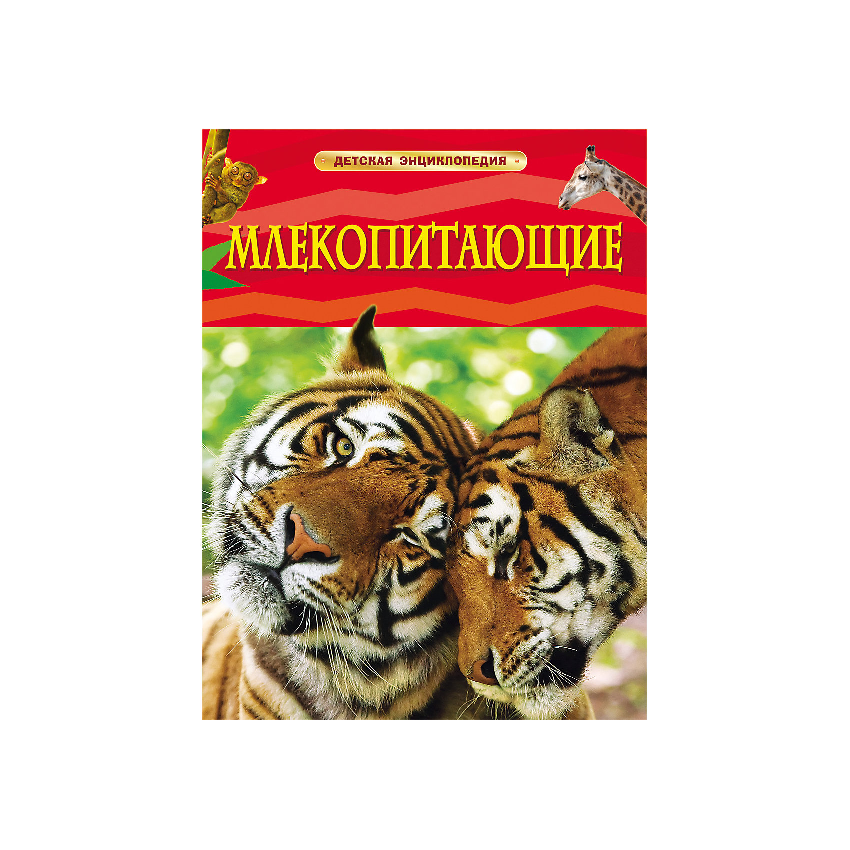 Млекопитающие, Детская энциклопедияДетские энциклопедии<br>Характеристики товара:<br><br>- цвет: разноцветный;<br>- материал: бумага;<br>- страниц: 48;<br>- формат: 20 x 26 см;<br>- обложка: твердая;<br>- цветные иллюстрации.<br><br>Эта интересная книга с иллюстрациями станет отличным подарком для ребенка. Она содержит в себе ответы на вопросы, которые интересуют малышей. Всё представлено в очень простой форме! Талантливый иллюстратор дополнил книгу качественными рисунками, которые помогают ребенку понять суть многих вещей в нашем мире. Удивительные и интересные факты помогут привить любовь к учебе!<br>Чтение - отличный способ активизации мышления, оно помогает ребенку развивать зрительную память, концентрацию внимания и воображение. Издание произведено из качественных материалов, которые безопасны даже для самых маленьких.<br><br>Книгу Млекопитающие, Детская энциклопедия от компании Росмэн можно купить в нашем интернет-магазине.<br><br>Ширина мм: 265<br>Глубина мм: 205<br>Высота мм: 5<br>Вес г: 337<br>Возраст от месяцев: 60<br>Возраст до месяцев: 84<br>Пол: Унисекс<br>Возраст: Детский<br>SKU: 5109969