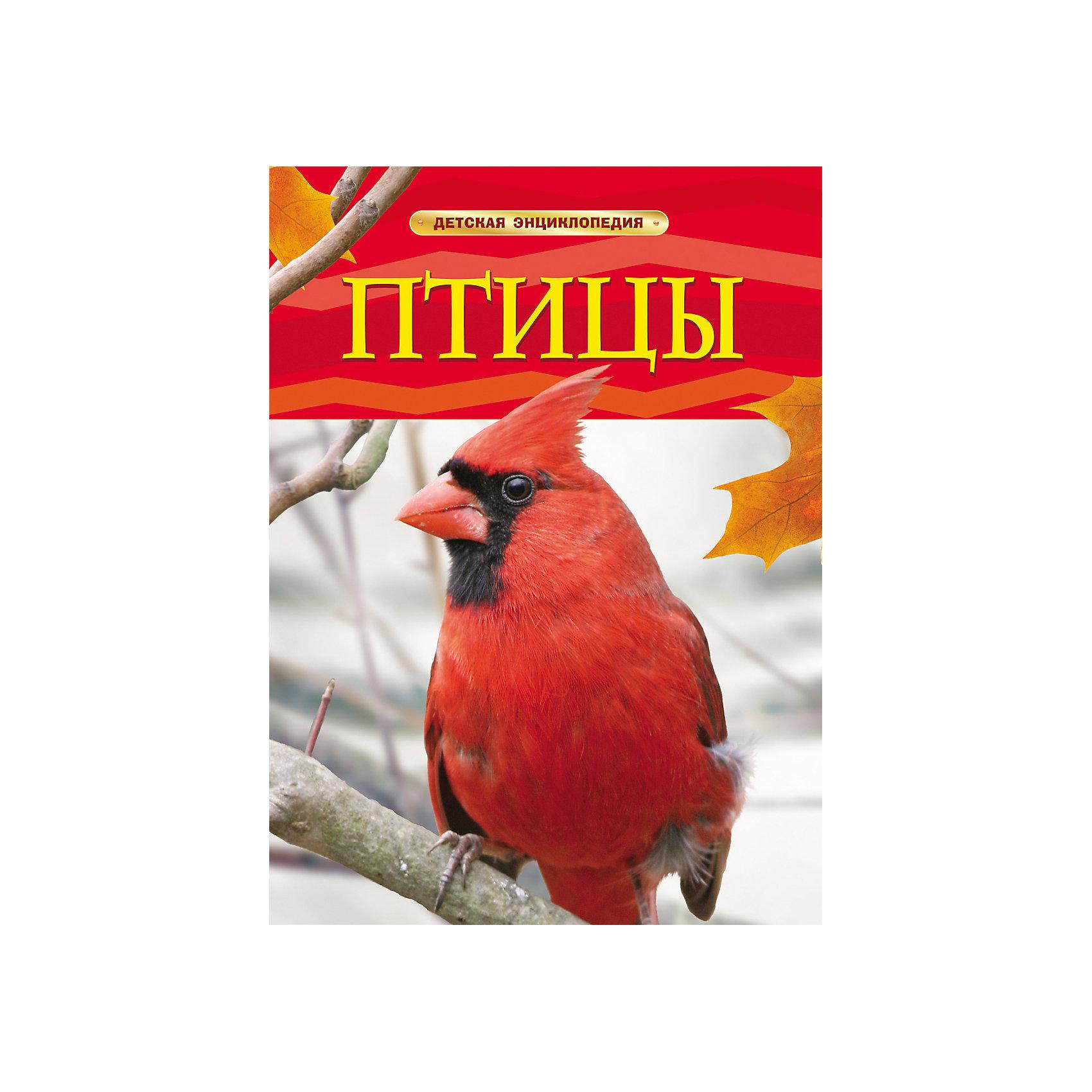 Росмэн Птицы, Детская энциклопедия росмэн энциклопедия птицы