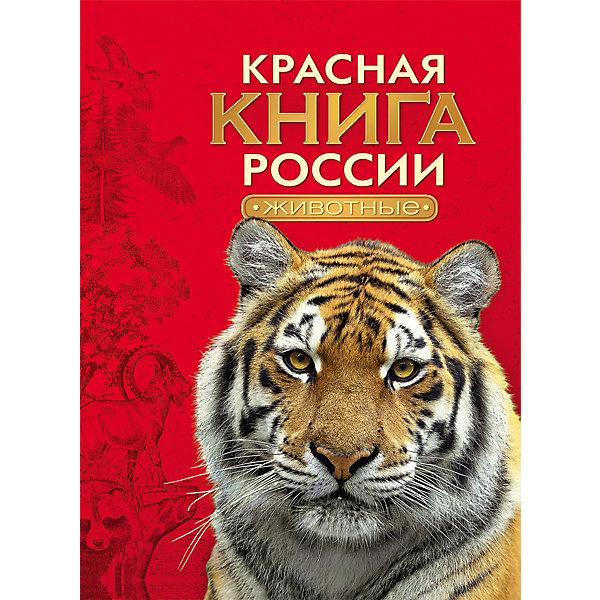 Красная книга России ЖивотныеДетские энциклопедии<br>Характеристики товара:<br><br>- цвет: разноцветный;<br>- материал: бумага;<br>- страниц: 240;<br>- формат: А4;<br>- обложка: твердая;<br>- цветные иллюстрации.<br><br>Эта интересная книга с иллюстрациями станет отличным подарком для ребенка. Она содержит в себе ответы на вопросы, которые интересуют малышей. Всё представлено в очень простой форме! Талантливый иллюстратор дополнил книгу качественными рисунками, которые помогают ребенку понять суть многих вещей в нашем мире. Удивительные и интересные факты помогут привить любовь к учебе!<br>Чтение - отличный способ активизации мышления, оно помогает ребенку развивать зрительную память, концентрацию внимания и воображение. Издание произведено из качественных материалов, которые безопасны даже для самых маленьких.<br><br>Книгу Красная книга России Животные от компании Росмэн можно купить в нашем интернет-магазине.<br>Ширина мм: 283; Глубина мм: 218; Высота мм: 18; Вес г: 769; Возраст от месяцев: 96; Возраст до месяцев: 144; Пол: Унисекс; Возраст: Детский; SKU: 5110001;