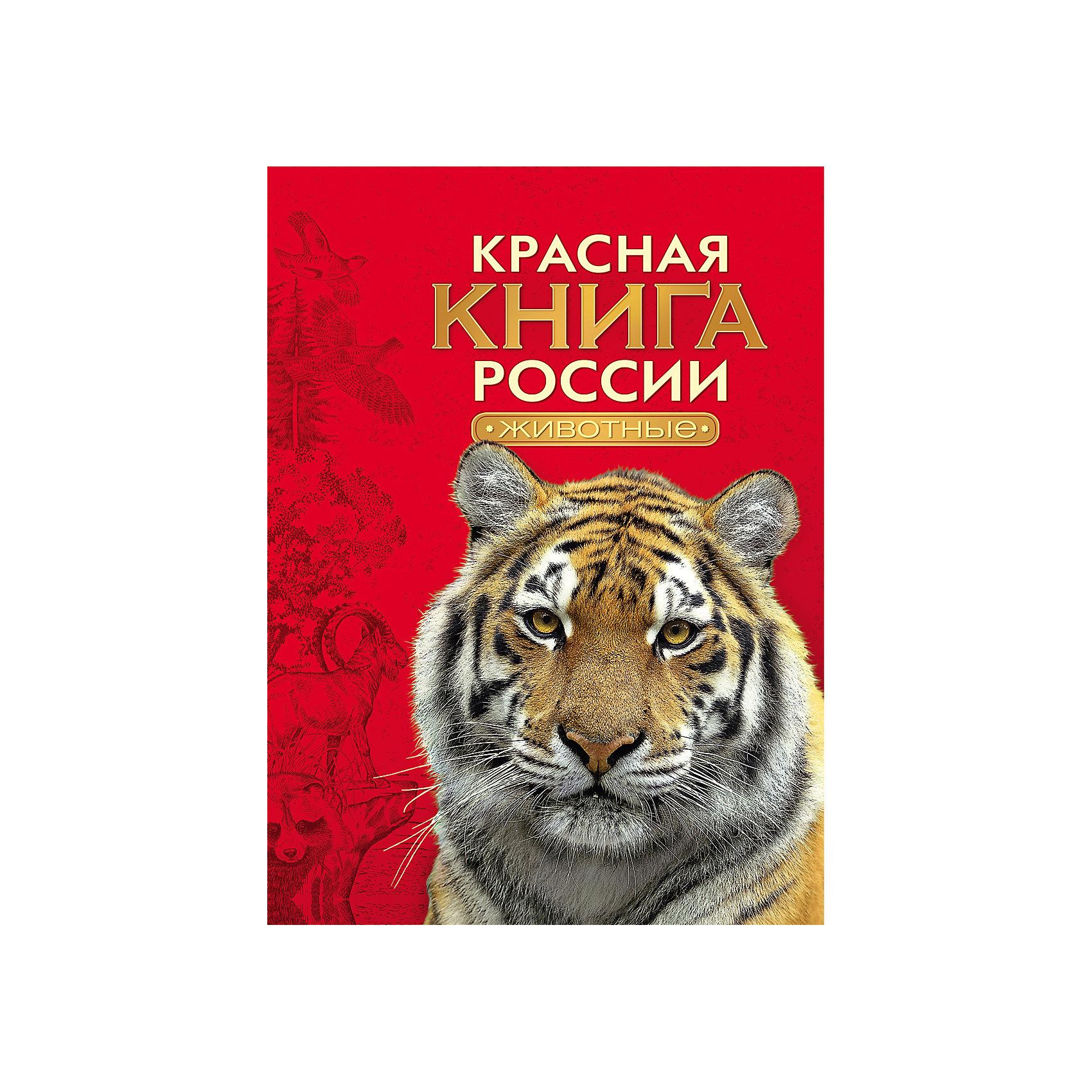 Красная книга России ЖивотныеДетские энциклопедии<br>Характеристики товара:<br><br>- цвет: разноцветный;<br>- материал: бумага;<br>- страниц: 240;<br>- формат: А4;<br>- обложка: твердая;<br>- цветные иллюстрации.<br><br>Эта интересная книга с иллюстрациями станет отличным подарком для ребенка. Она содержит в себе ответы на вопросы, которые интересуют малышей. Всё представлено в очень простой форме! Талантливый иллюстратор дополнил книгу качественными рисунками, которые помогают ребенку понять суть многих вещей в нашем мире. Удивительные и интересные факты помогут привить любовь к учебе!<br>Чтение - отличный способ активизации мышления, оно помогает ребенку развивать зрительную память, концентрацию внимания и воображение. Издание произведено из качественных материалов, которые безопасны даже для самых маленьких.<br><br>Книгу Красная книга России Животные от компании Росмэн можно купить в нашем интернет-магазине.<br><br>Ширина мм: 283<br>Глубина мм: 218<br>Высота мм: 18<br>Вес г: 769<br>Возраст от месяцев: 96<br>Возраст до месяцев: 144<br>Пол: Унисекс<br>Возраст: Детский<br>SKU: 5110001