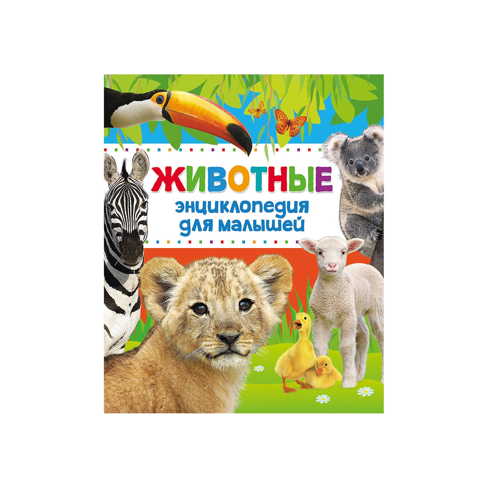 Энциклопедия для малышей ЖивотныеРосмэн<br>Характеристики товара:<br><br>- цвет: разноцветный;<br>- материал: бумага;<br>- страниц: 144;<br>- формат: 84х100/16;<br>- обложка: твердая;<br>- цветные иллюстрации.<br><br>Эта интересная книга с иллюстрациями станет отличным подарком для ребенка. Она содержит в себе яркие картинки, которые помогут малышам познакомиться со многими предметами из окружающего мира, а также пояснения к ним. В книге - море полезной информации для ребенка!<br>Чтение и рассматривание картинок даже в юном возрасте помогает ребенку развивать зрительную память, концентрацию внимания и воображение. Издание произведено из качественных материалов, которые безопасны даже для самых маленьких.<br><br>Издание Энциклопедия для малышей Животные от компании Росмэн можно купить в нашем интернет-магазине.<br><br>Ширина мм: 243<br>Глубина мм: 204<br>Высота мм: 10<br>Вес г: 561<br>Возраст от месяцев: 36<br>Возраст до месяцев: 72<br>Пол: Унисекс<br>Возраст: Детский<br>SKU: 5110161