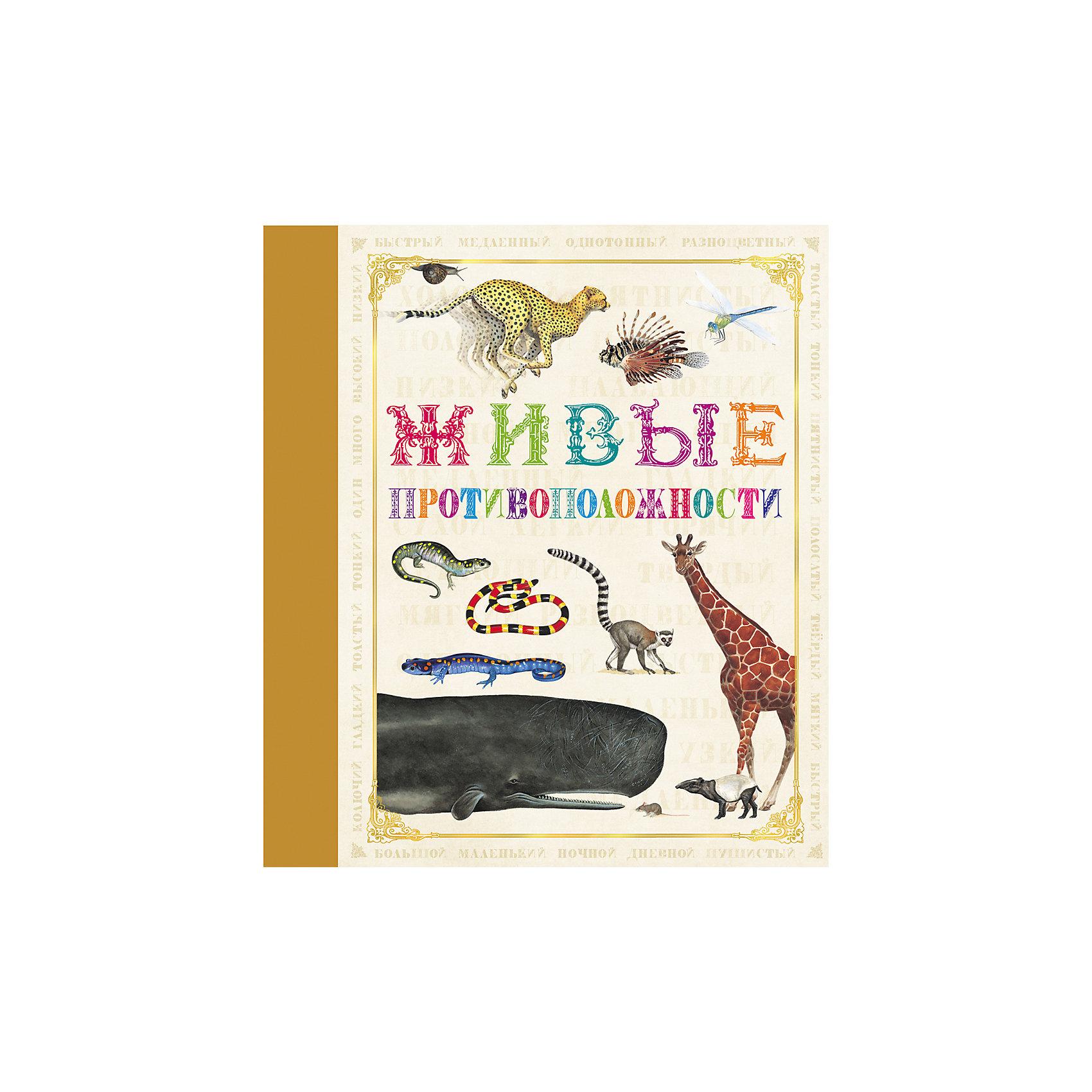 Живые противоположностиХарактеристики товара:<br><br>- цвет: разноцветный;<br>- материал: бумага;<br>- страниц: 32;<br>- формат: 24 х 21 см;<br>- обложка: твердая;<br>- цветные иллюстрации.<br><br>Эта интересная книга с иллюстрациями станет отличным подарком для ребенка. Она содержит в себе яркие картинки, которые помогут малышам познакомиться со многими животными, а также пояснения к ним. Плюс - малыш сможет легко освоить понятие противоположностей. В книге - море полезной информации для ребенка!<br>Чтение и рассматривание картинок помогает ребенку развивать зрительную память, концентрацию внимания и воображение. Издание произведено из качественных материалов, которые безопасны даже для самых маленьких.<br><br>Издание Живые противоположности  от компании Росмэн можно купить в нашем интернет-магазине.<br><br>Ширина мм: 245<br>Глубина мм: 215<br>Высота мм: 7<br>Вес г: 265<br>Возраст от месяцев: 60<br>Возраст до месяцев: 84<br>Пол: Унисекс<br>Возраст: Детский<br>SKU: 5110168