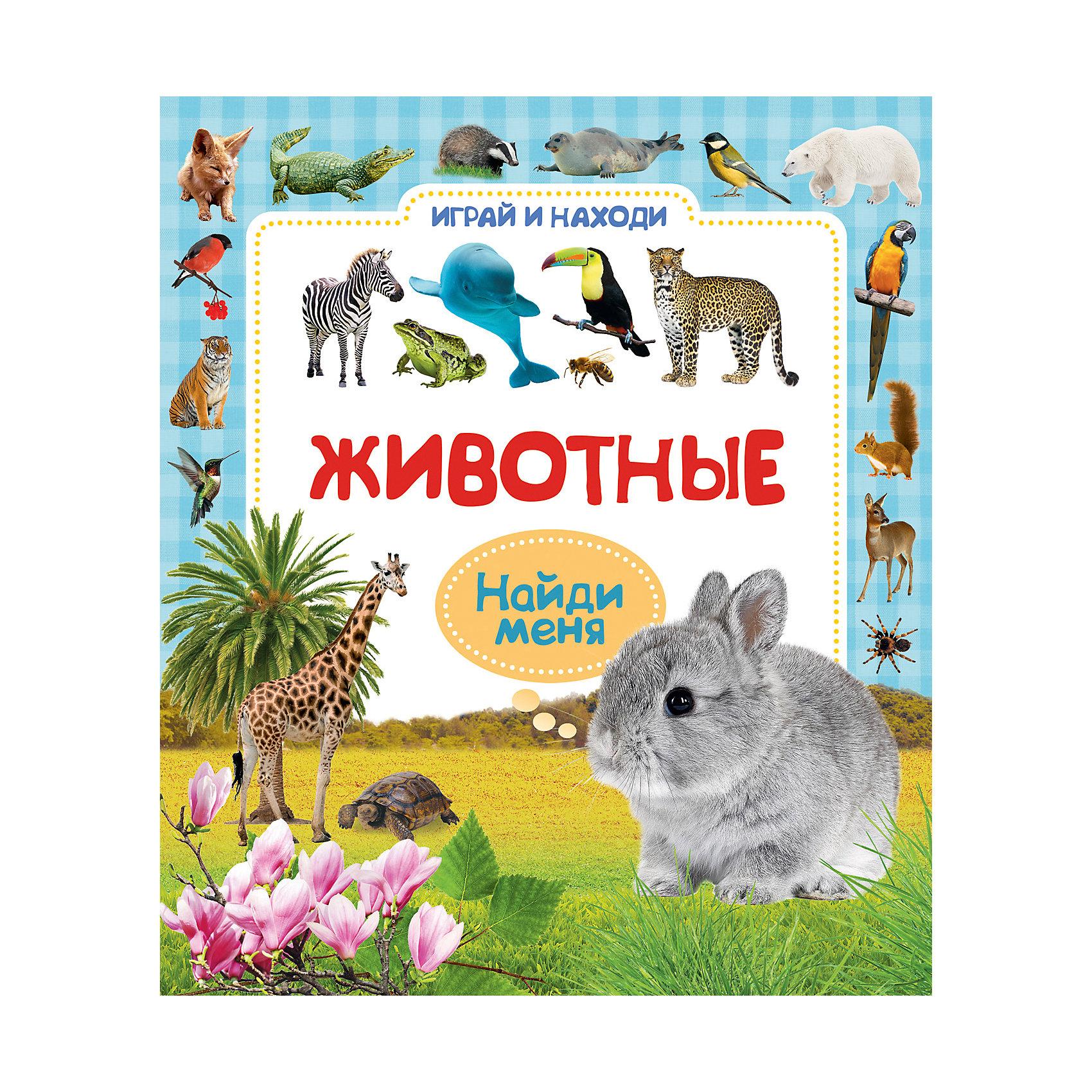 Играй и находи ЖивотныеХарактеристики товара:<br><br>- цвет: разноцветный;<br>- материал: бумага;<br>- страниц: 6;<br>- формат: 25 х 22 см;<br>- обложка: твердая;<br>- иллюстрации.<br><br>Учиться важным навыкам можно в веселой форме! Эта интересная книга с иллюстрациями станет отличным подарком для ребенка. Она поможет малышу узнать новое и равить важные навыки, находя нужные объекты. Талантливый иллюстратор дополнил книгу качественными рисунками, которые помогают ребенку познавать мир.<br>Такие игры помогает ребенку развивать зрительную память, концентрацию внимания и воображение. Издание произведено из качественных материалов, которые безопасны даже для самых маленьких.<br><br>Книгу Играй и находи Животные от компании Росмэн можно купить в нашем интернет-магазине.<br><br>Ширина мм: 250<br>Глубина мм: 225<br>Высота мм: 7<br>Вес г: 275<br>Возраст от месяцев: 0<br>Возраст до месяцев: 36<br>Пол: Унисекс<br>Возраст: Детский<br>SKU: 5110306