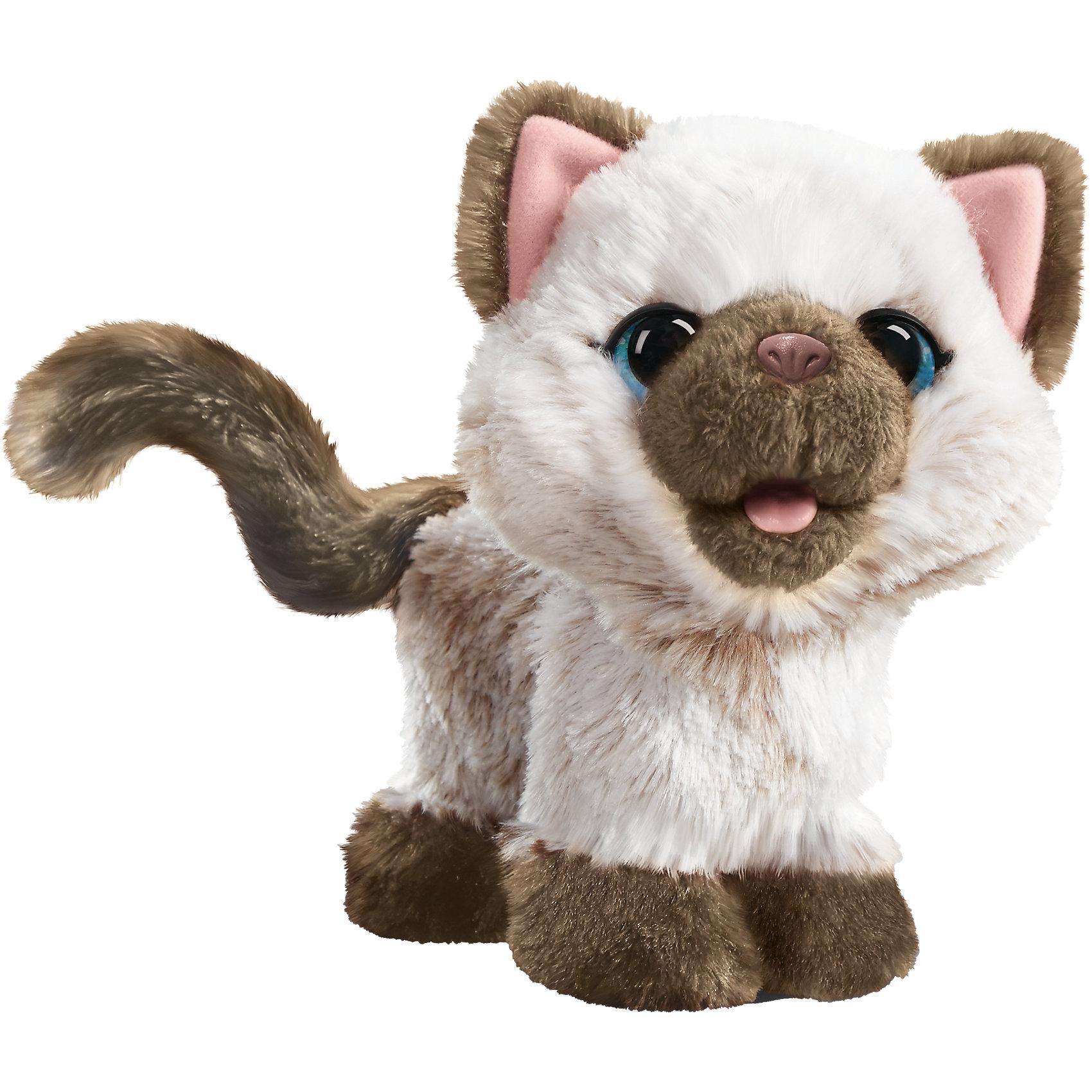 Забавный котенок, друг Пакса, FurReal FriendsКошки и собаки<br>Характеристики:<br><br>• Вид игр: сюжетно-ролевые, коллекционирование<br>• Пол: для девочек<br>• Коллекция: FurReal Friends<br>• Материал: текстиль, пластик<br>• Комплектация: котенок, бутылочка для кормления, инструкция<br>• Батарейки: 2 шт. типа AА (предусмотрены в комплекте)<br>• Высота игрушки: 17 см<br>• Поворачивает голову<br>• Передние лапки поднимает<br>• Умеет издавать звуки<br>• Вес в упаковке: 320 г<br>• Размеры упаковки (Д*Ш*В): 21,6*10,8*22,9 см<br>• Упаковка: картонная коробка <br><br>Забавный котенок, друг Пакса, FurReal Friends – это коллекция милых пушистых животных от Хасбро, которые могут стать настоящими друзьями для вашего ребенка. Котенок выполнен из гипоаллергенного плюша с ворсом средней длины, у него большие зеленые глазки, розовый носик и язычок. У игрушки предусмотрен расширенный функционал: котенок умеет издавать звуки, поворачивает головой, если котенку нажать на животик, он начинает поднимать передние лапки. В комплекте с котенком предусмотрена бутылочка для кормления, которая сделана в форме рыбки. Сюжетно-ролевые игры с интерактивными питомцами научат вашего ребенка быть заботливым, ответственным и внимательным. Забавный котенок, друг Пакса, FurReal Friends станет идеальным подарком для ребенка, который мечтает о домашнем питомце. <br><br>Забавного котенка, друга Пакса, FurReal Friends можно купить в нашем интернет-магазине.<br><br>Ширина мм: 324<br>Глубина мм: 250<br>Высота мм: 149<br>Вес г: 476<br>Возраст от месяцев: 48<br>Возраст до месяцев: 72<br>Пол: Женский<br>Возраст: Детский<br>SKU: 5129133